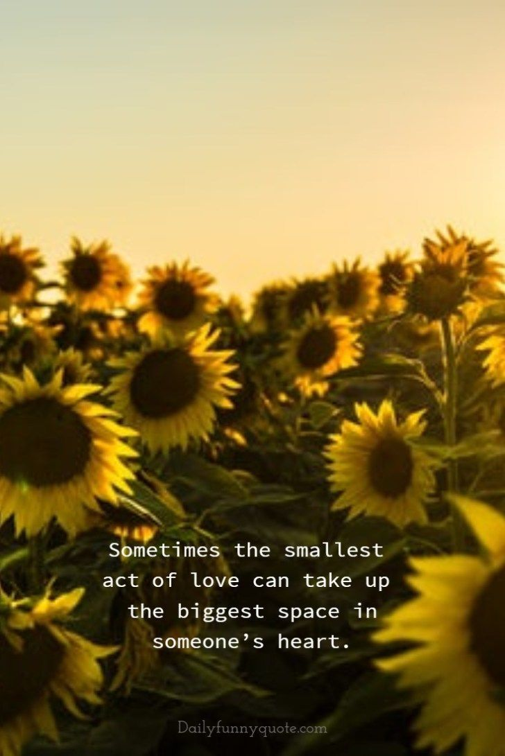 Sunflower Quotes Wallpapers Top Free Sunflower Quotes Backgrounds Wallpaperaccess