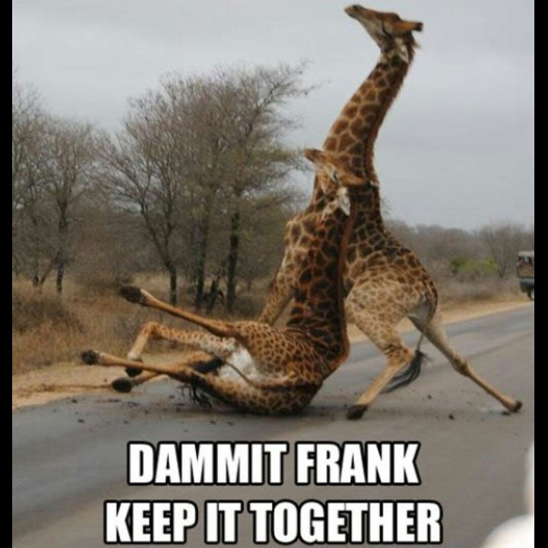 Funny Drunk Animals Wallpapers Top Free Funny Drunk Animals