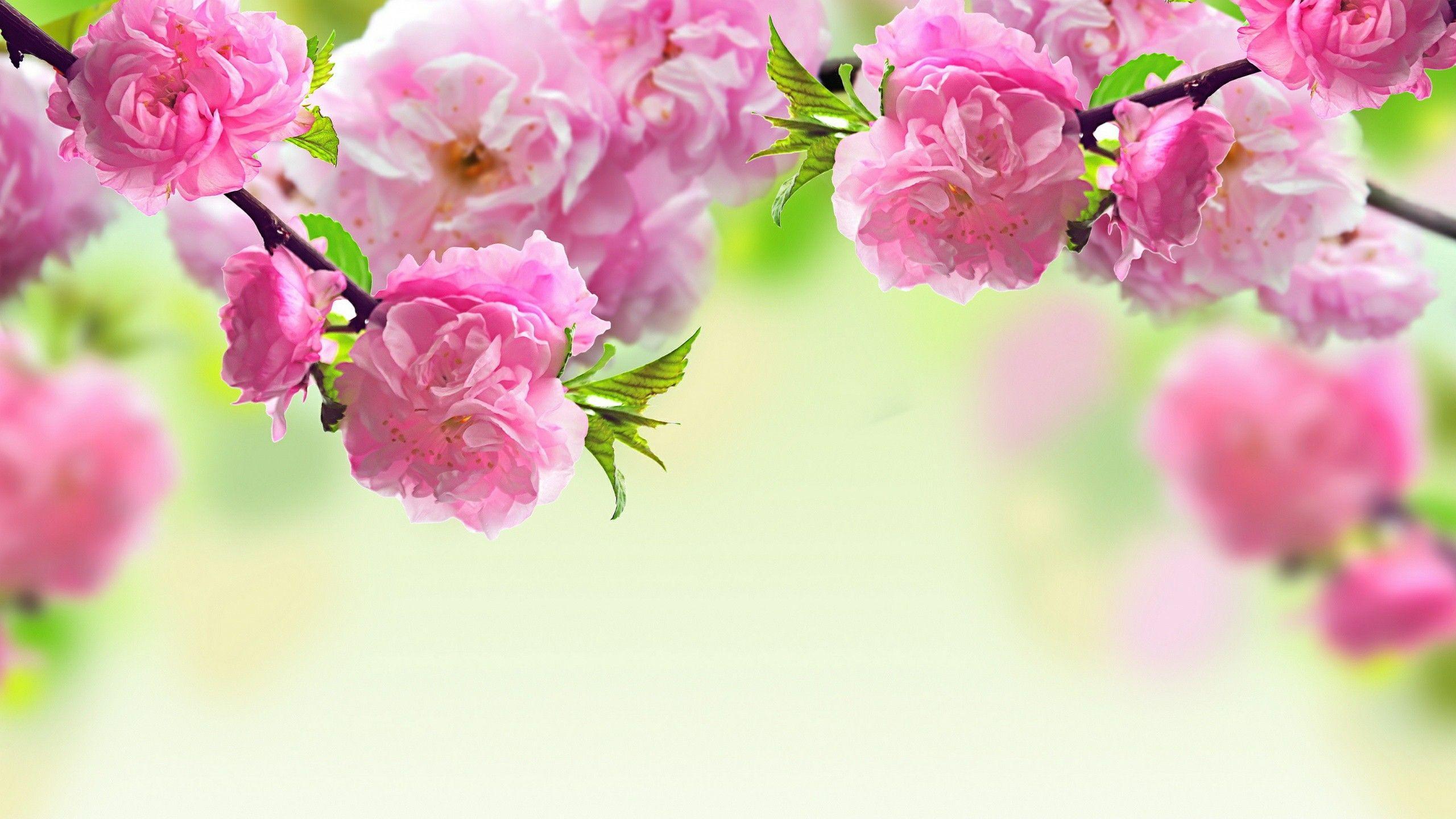 Flowers Healthy
