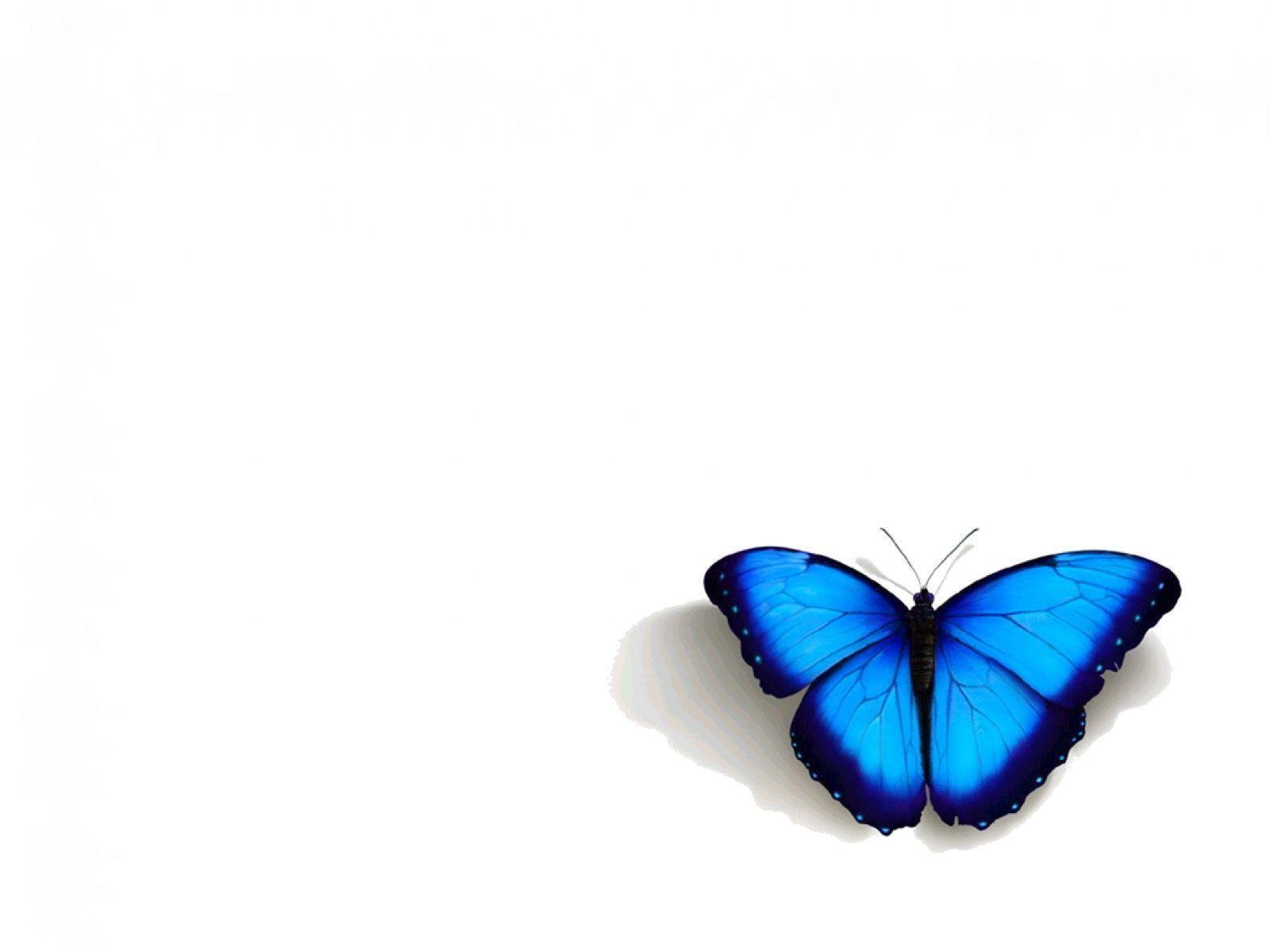 Blue Butterfly Wallpapers Top Free Blue Butterfly