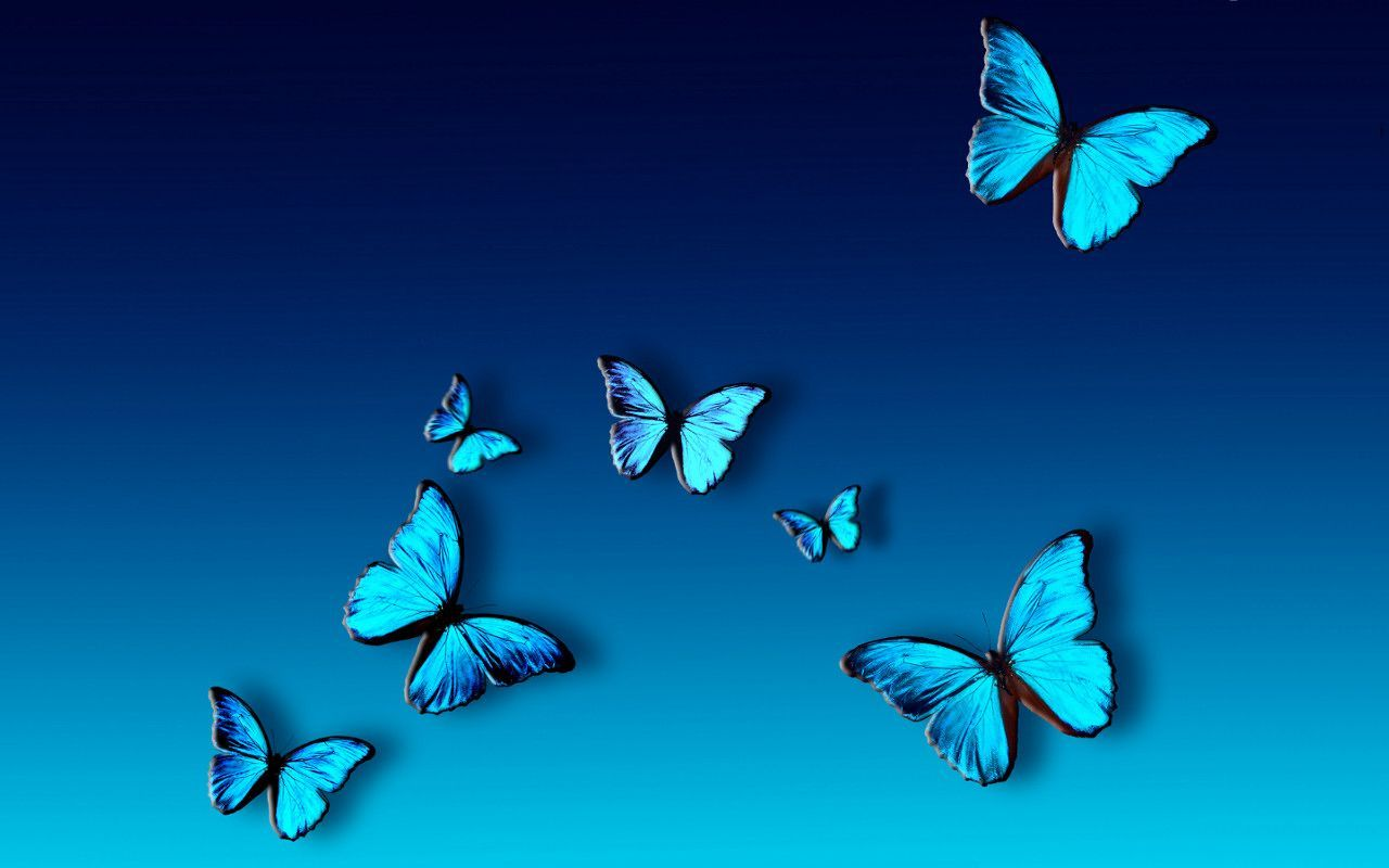 Blue Butterfly Wallpapers Top Free Blue Butterfly Backgrounds Wallpaperaccess