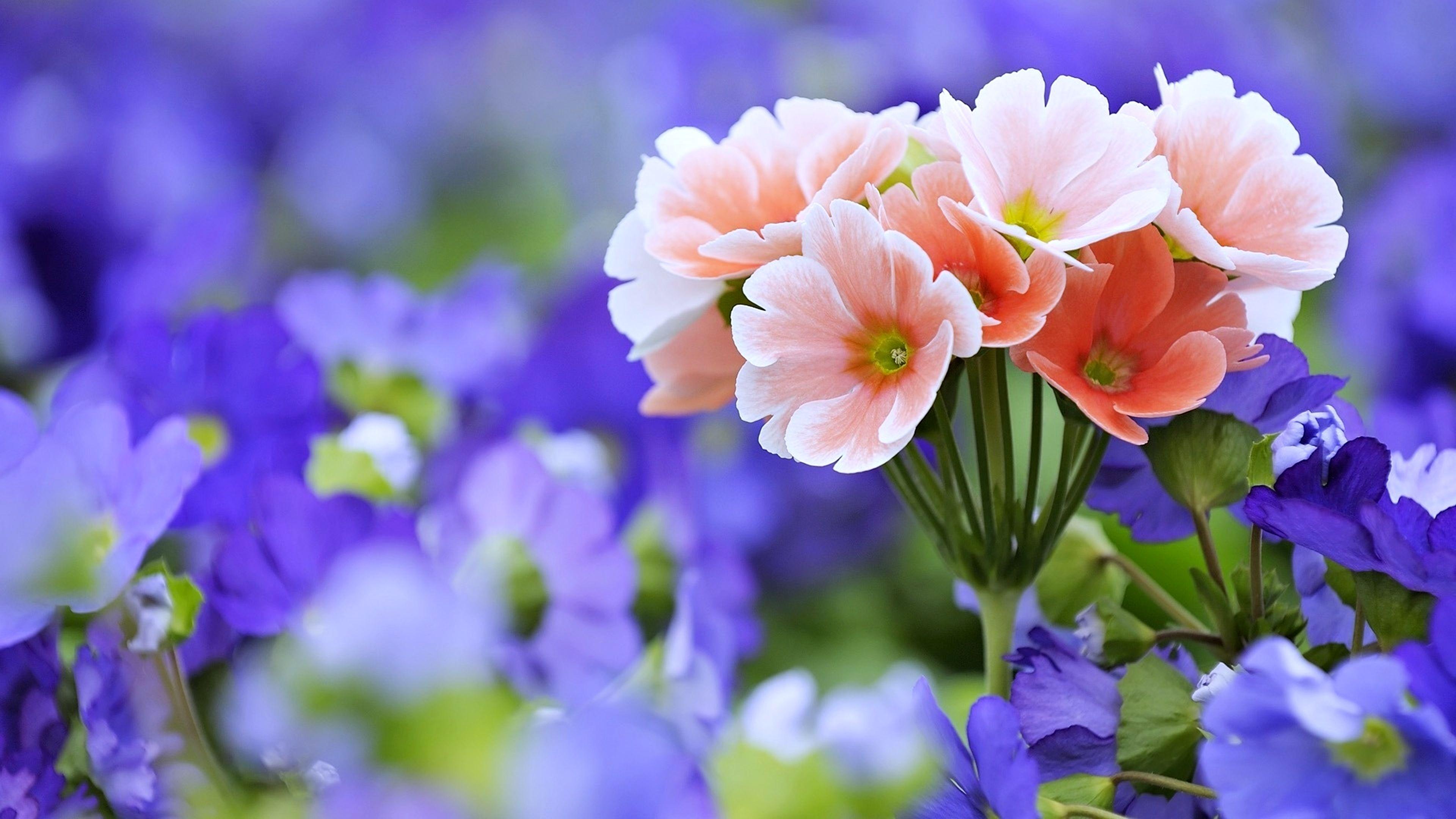 Flower Wallpapers Top Free Flower Backgrounds Wallpaperaccess