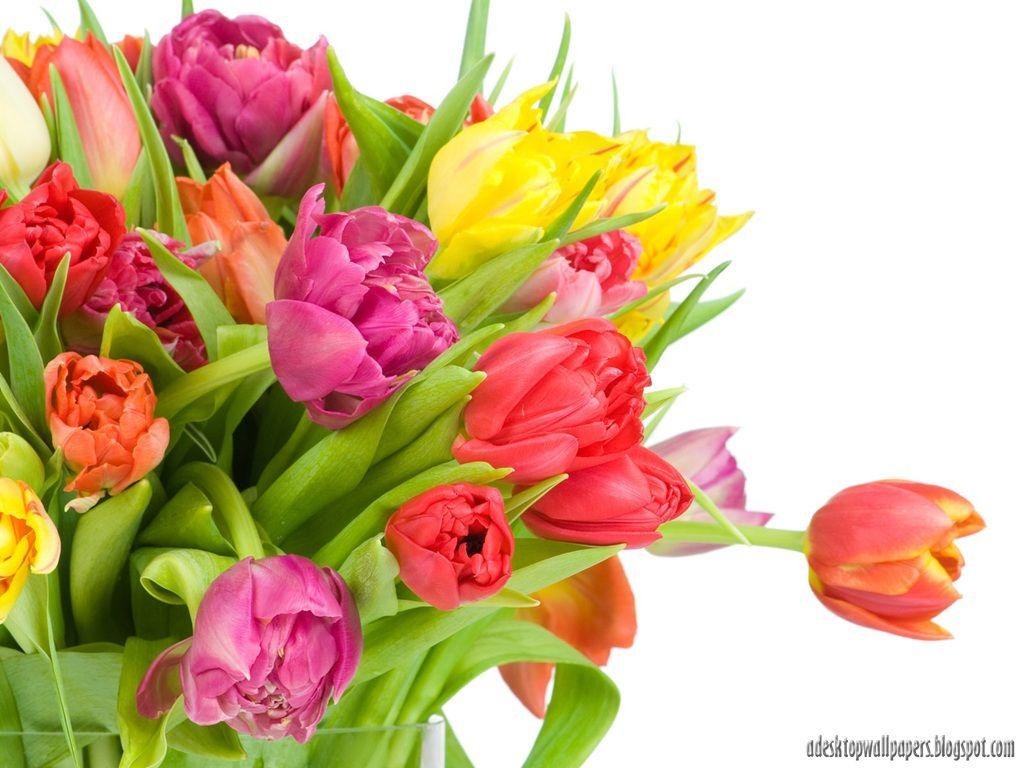 Top Free Flower PC Backgrounds