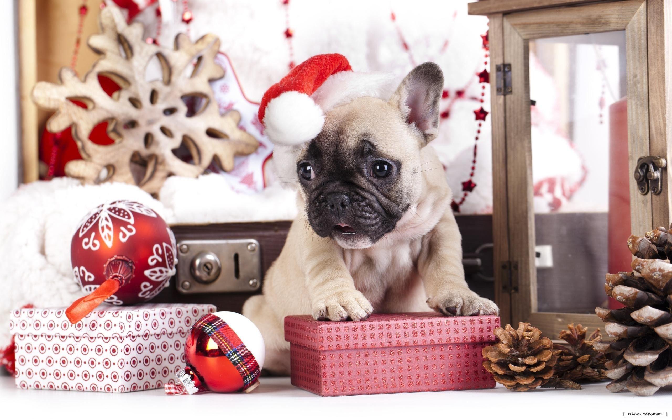 Christmas Animal Wallpapers , Top Free Christmas Animal