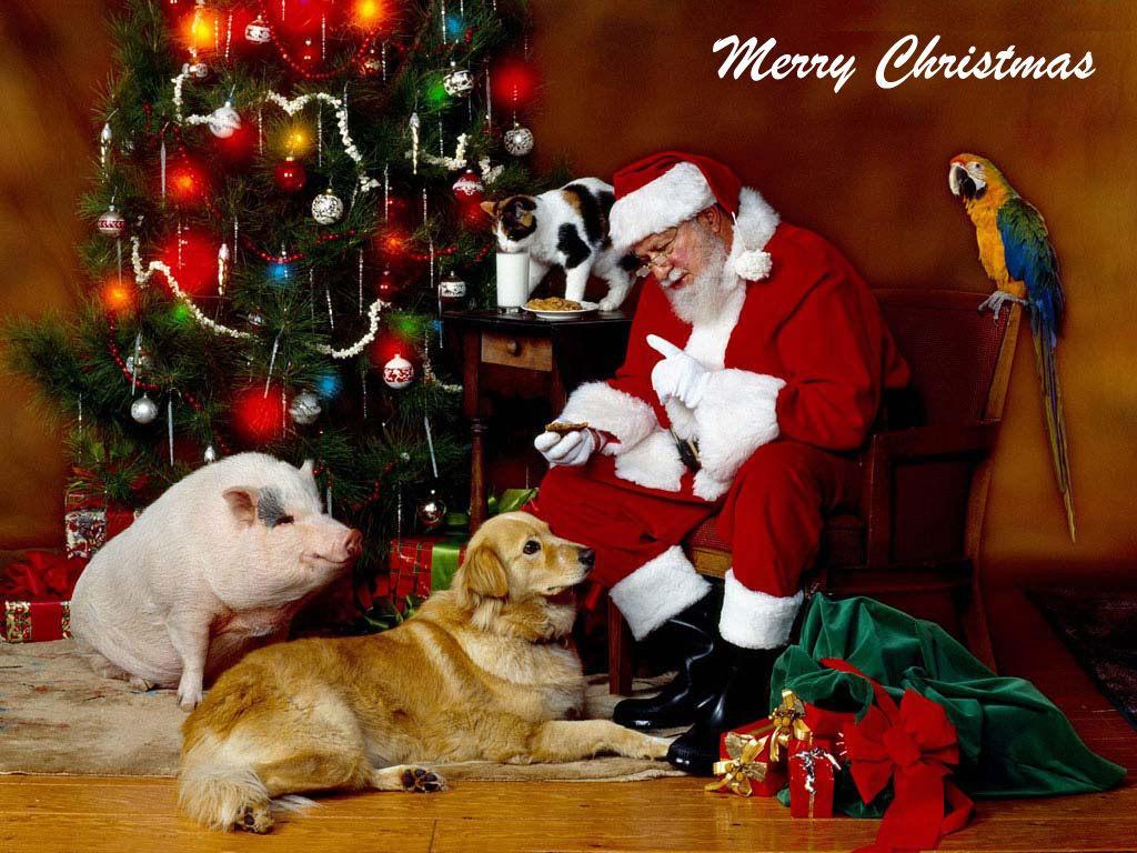 Merry Christmas Animals.Christmas Animal Wallpapers Top Free Christmas Animal Backgrounds