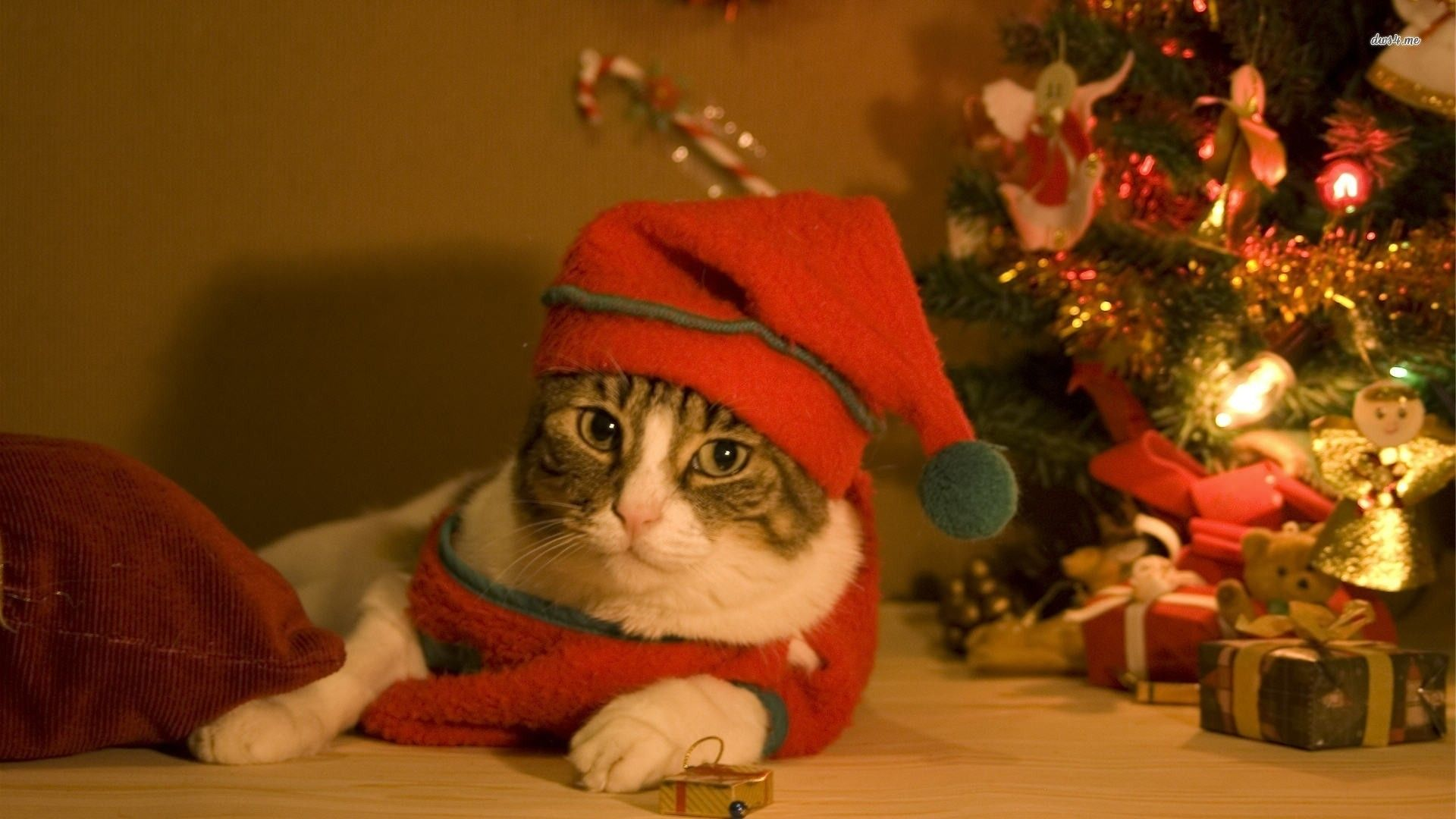52 Best Free Christmas Animal Wallpapers Wallpaperaccess