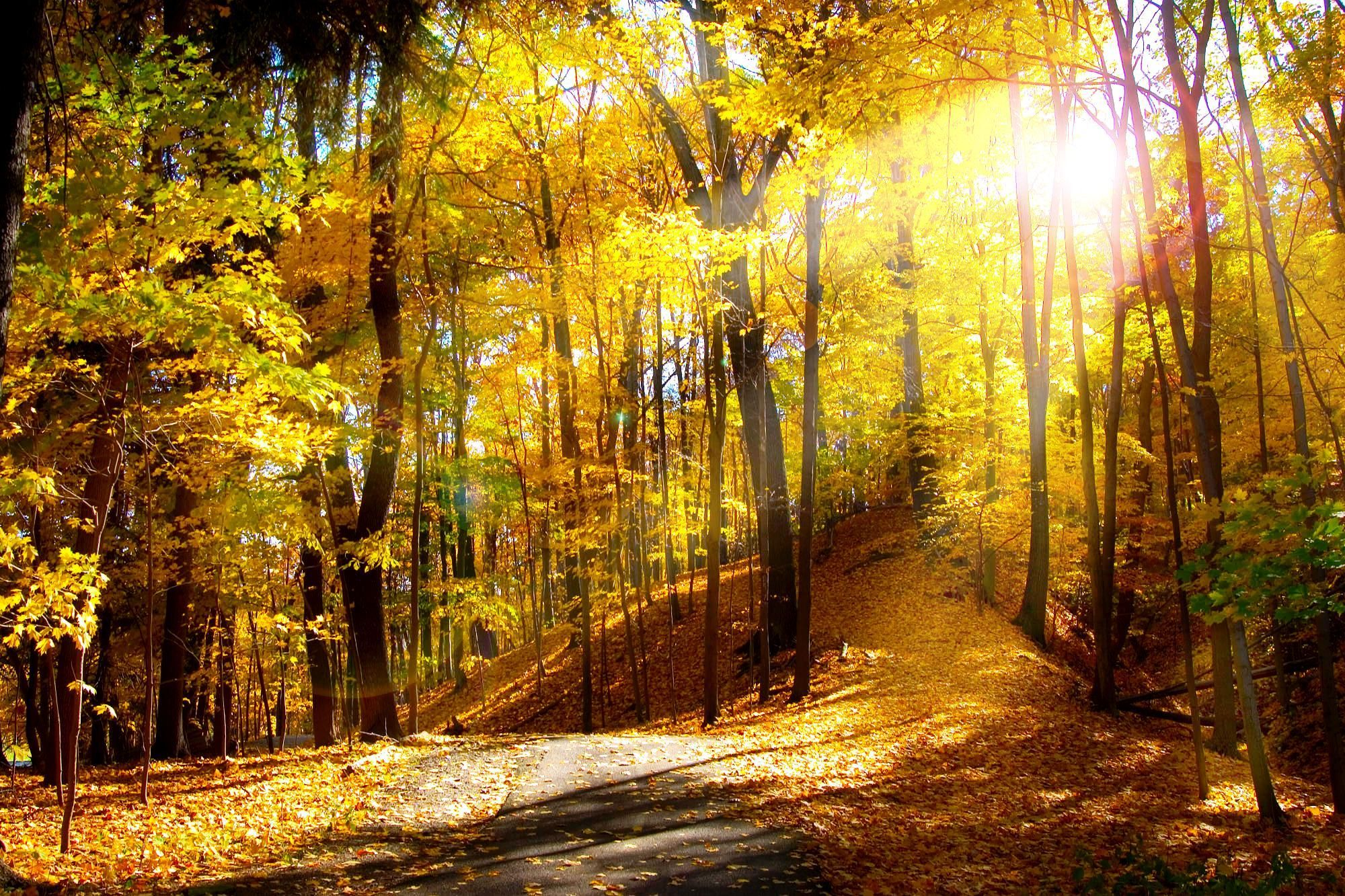 High Resolution Fall Wallpapers Top Free High Resolution Fall Backgrounds Wallpaperaccess