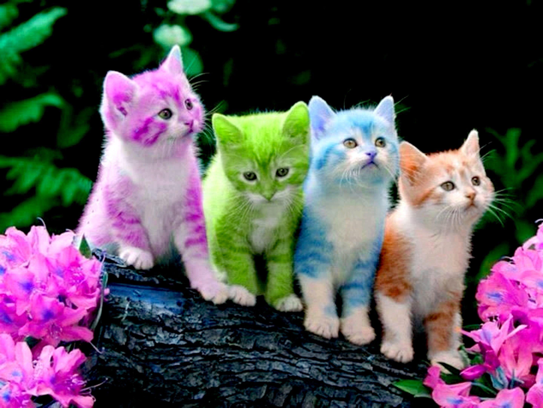 Cute Kitten Wallpapers - Top Free Cute