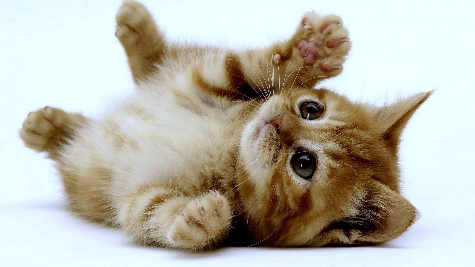 Kitties Wallpapers Top Free Kitties Backgrounds Wallpaperaccess