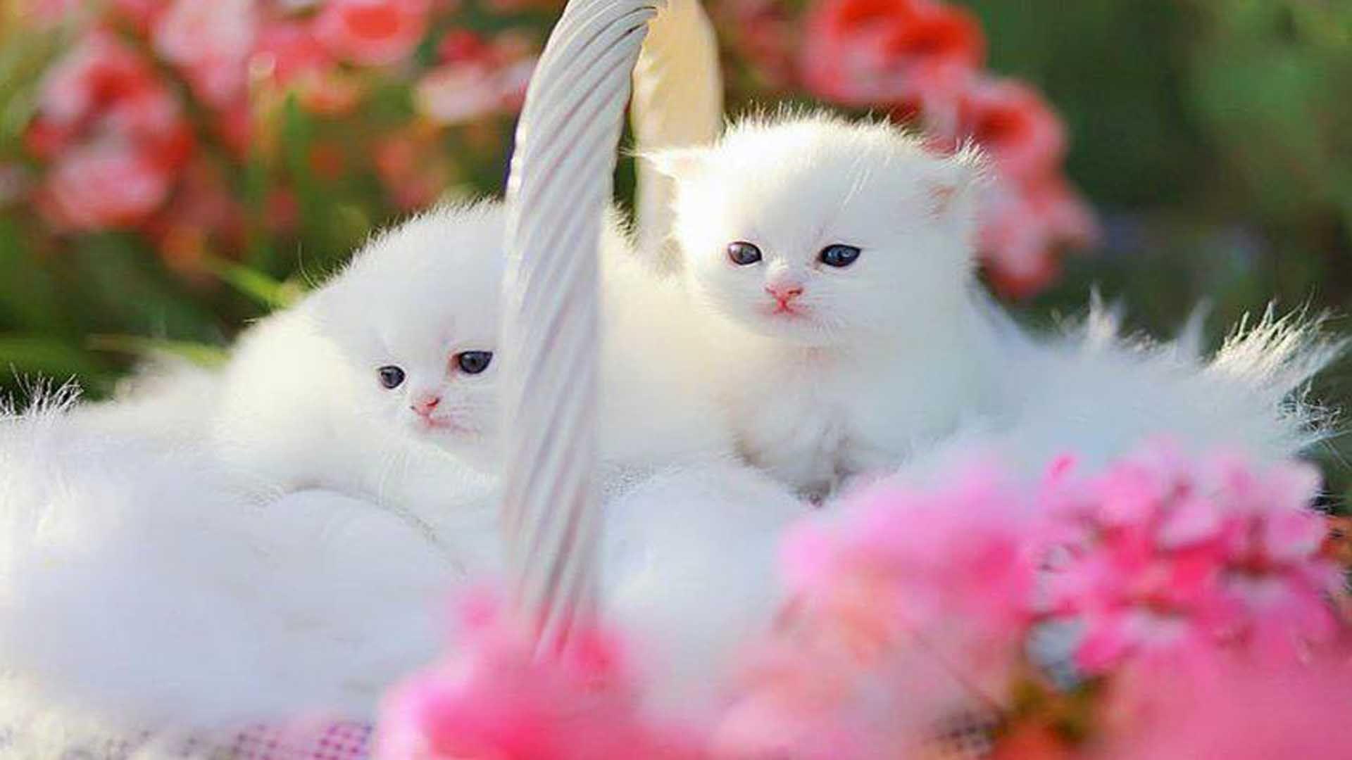 Cute kitten wallpapers top free cute kitten backgrounds - Cute kittens hd images ...