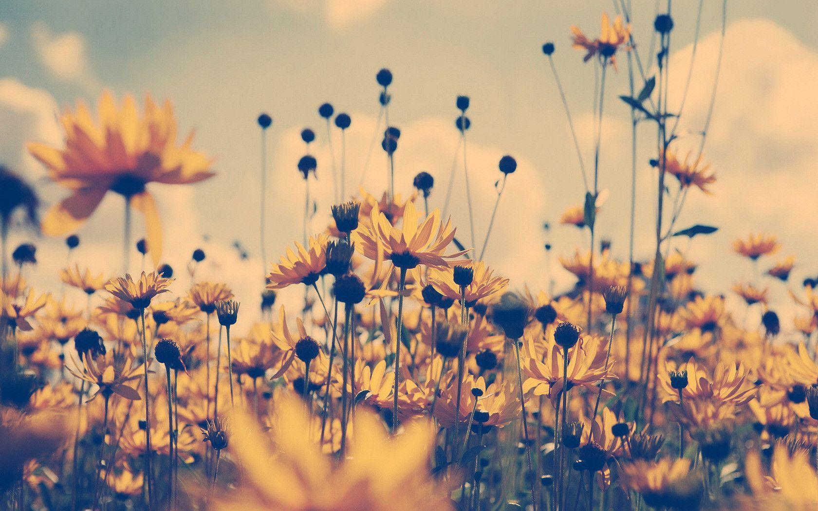 1680x1050 Boho Girl Field Of Flowers hình nền