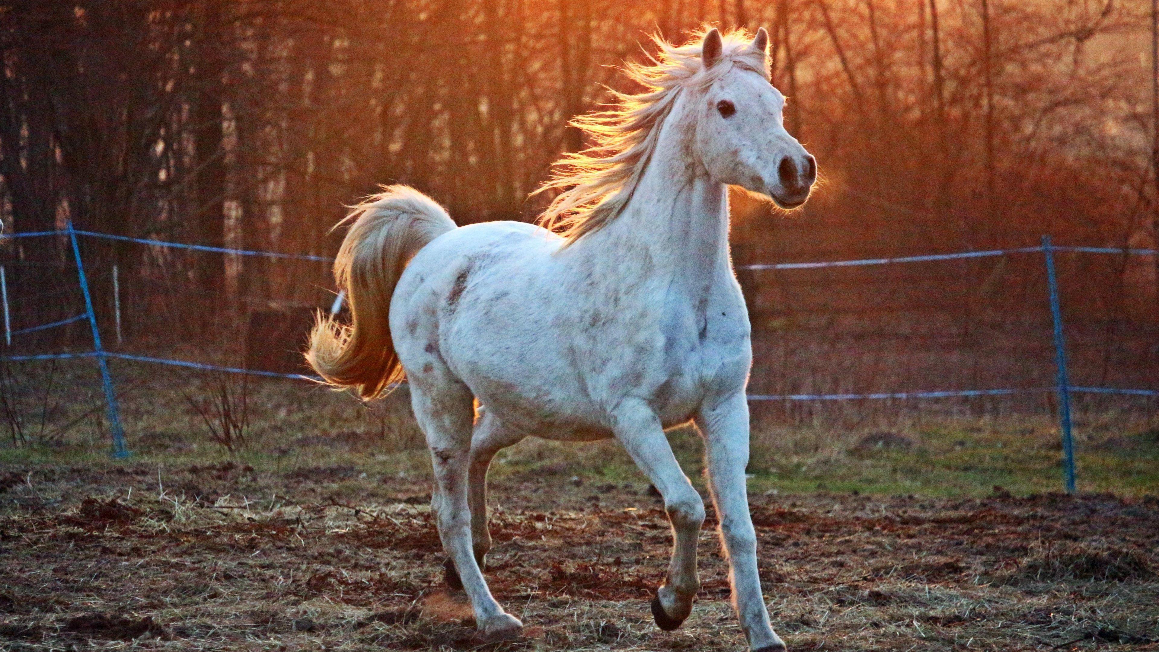 Desktop Wallpaper Hd Horse