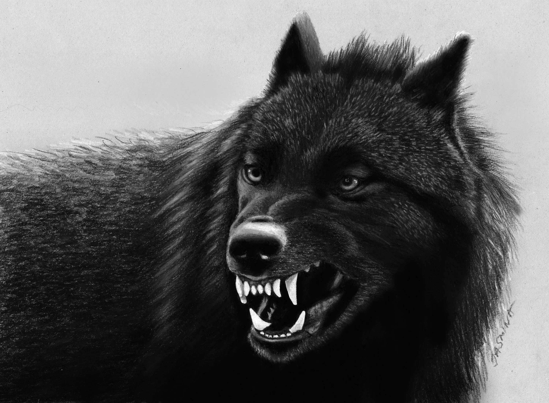 Black Wolf Desktop Wallpapers Top Free Black Wolf Desktop Backgrounds Wallpaperaccess