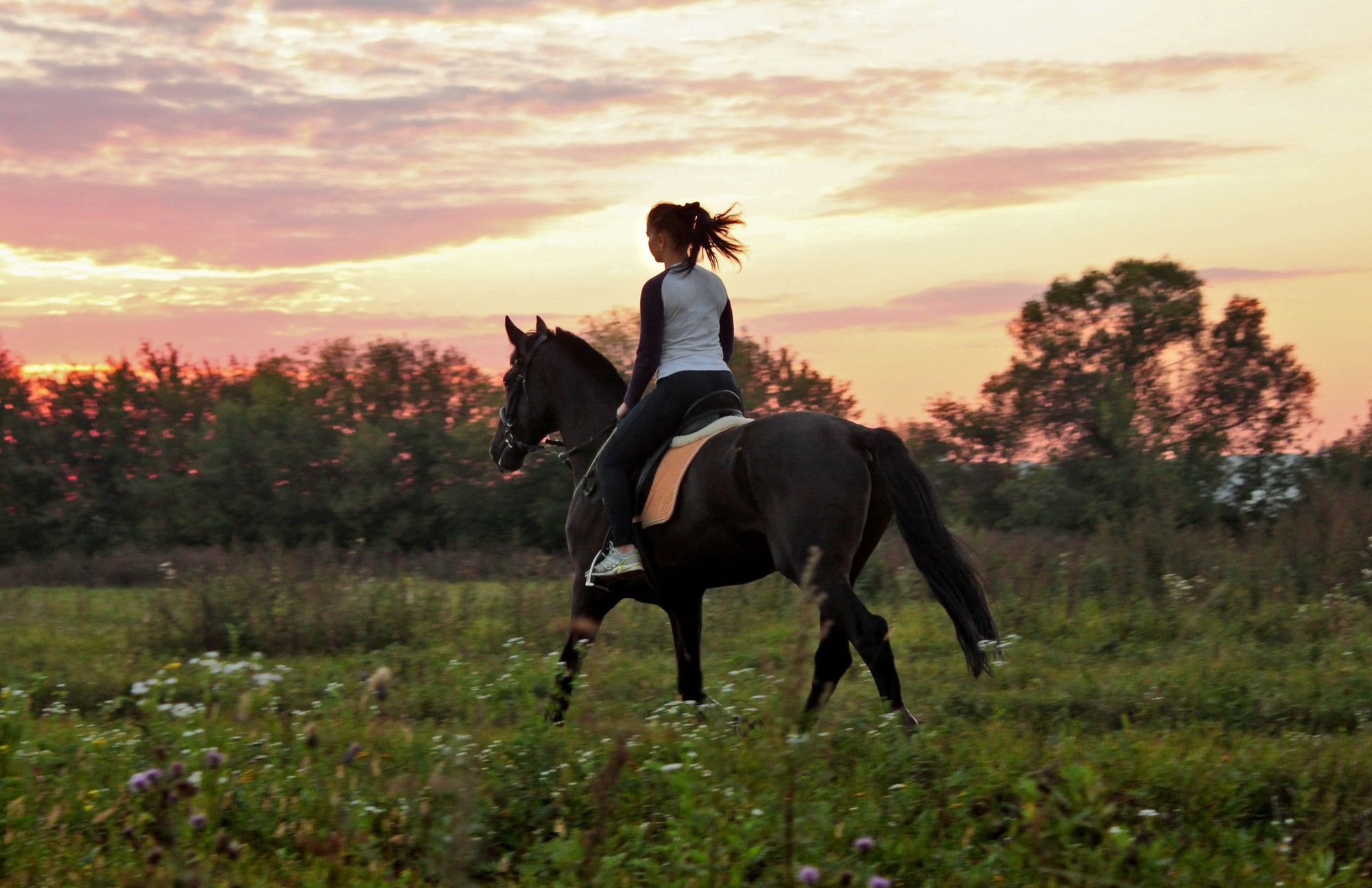 Horse Rider Wallpapers Top Free Horse Rider Backgrounds Wallpaperaccess