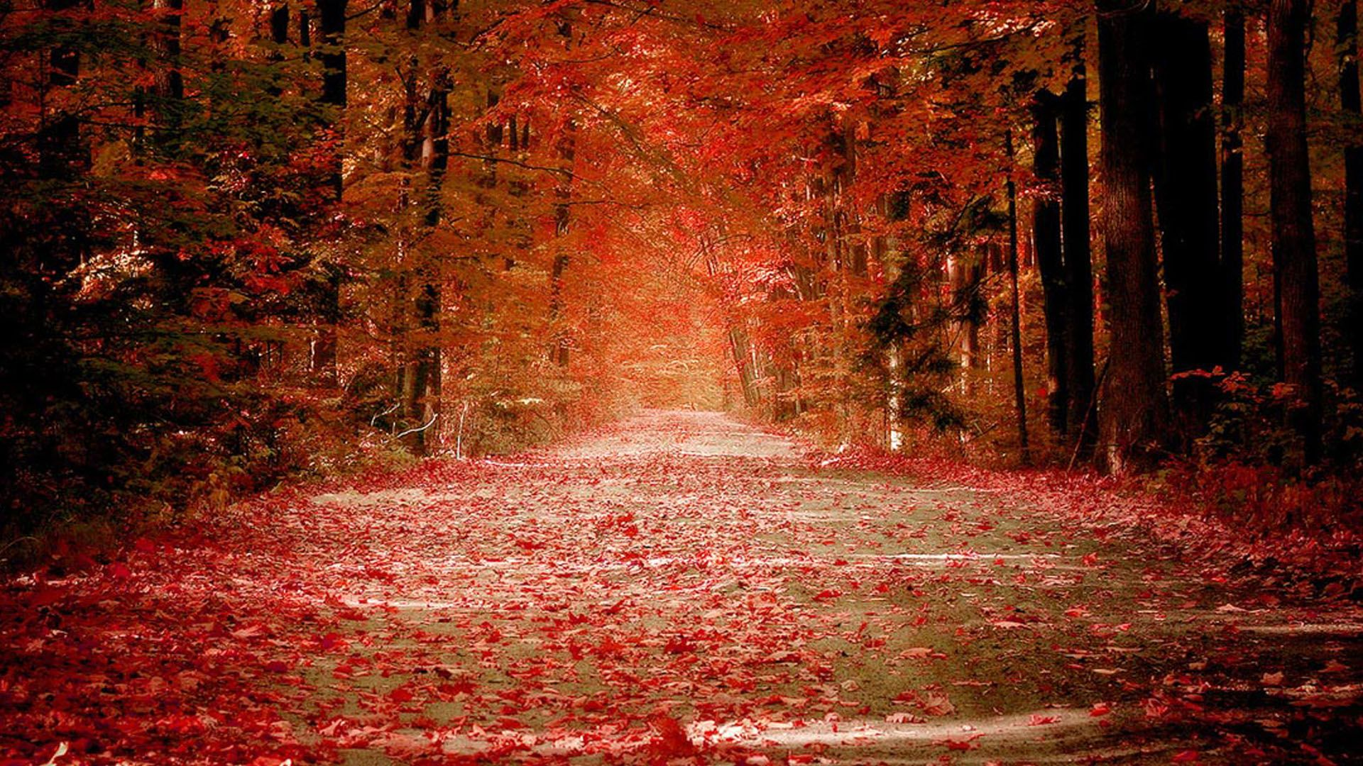 Fall Nature Backgrounds