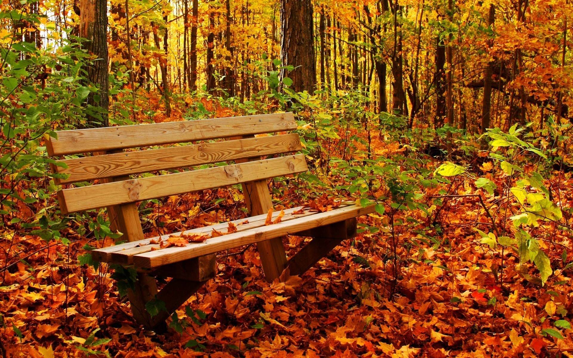 Fall Nature Desktop Wallpapers - Top Free Fall Nature Desktop