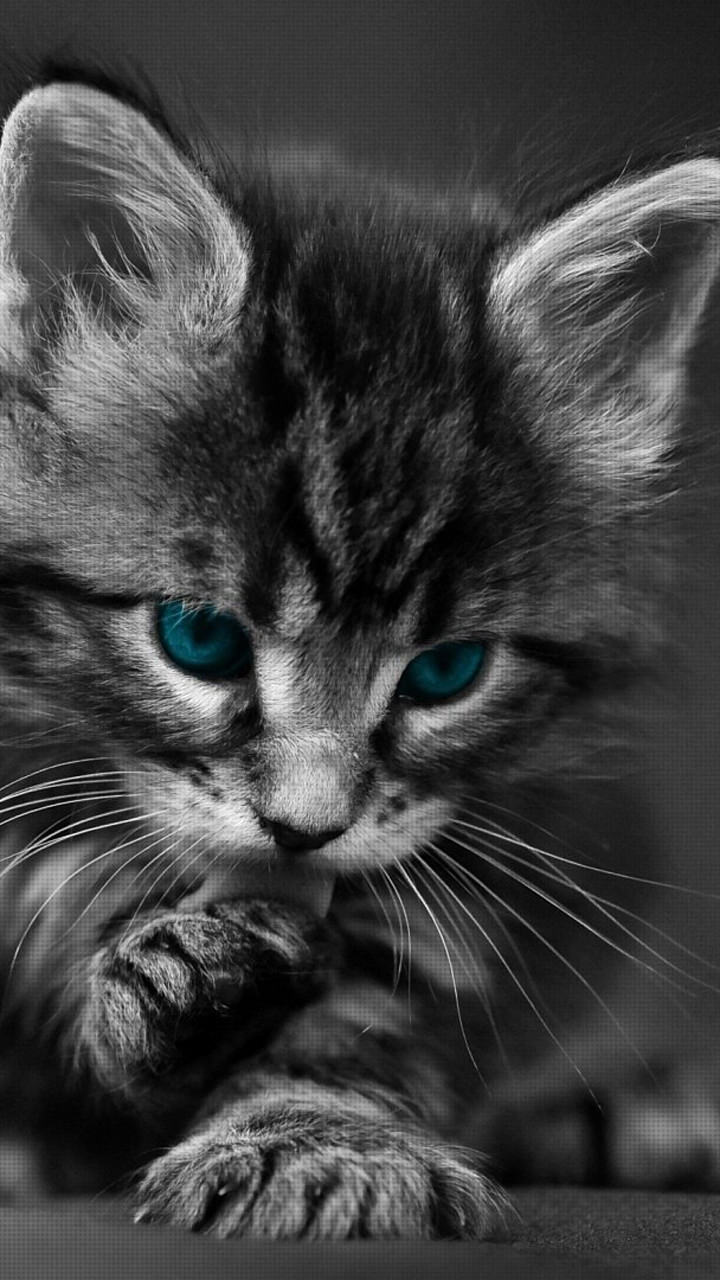 Cat Phone Wallpapers Top Free Cat Phone Backgrounds Wallpaperaccess