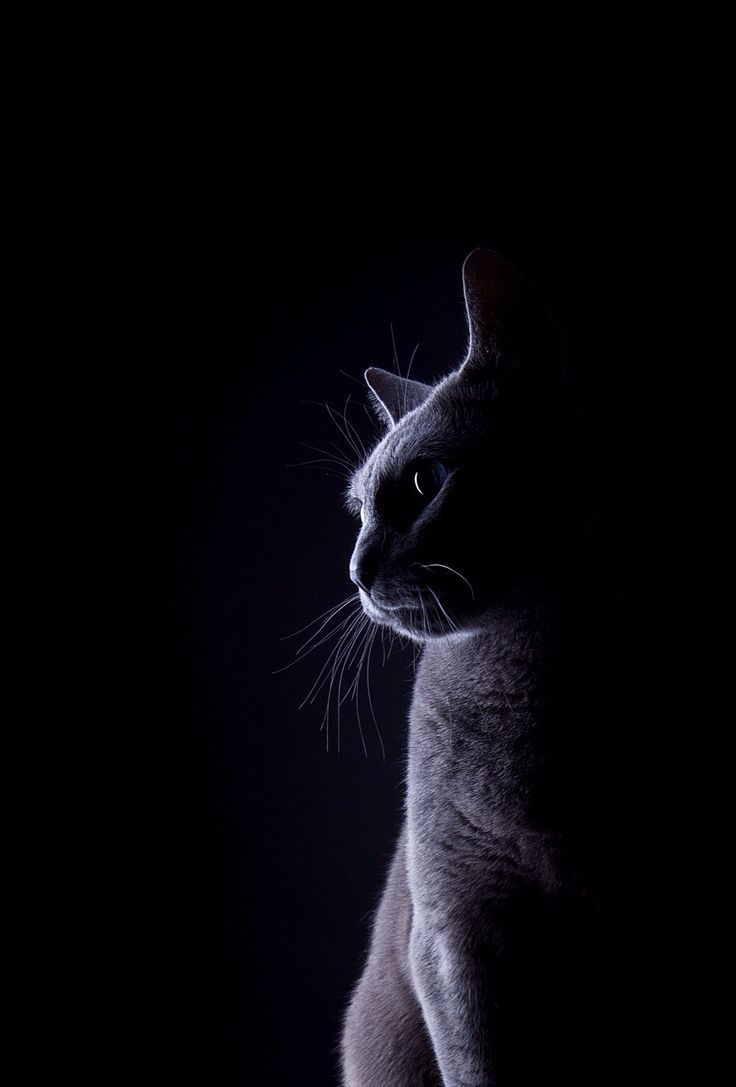 Black Cat Phone Wallpapers Top Free Black Cat Phone Backgrounds Wallpaperaccess