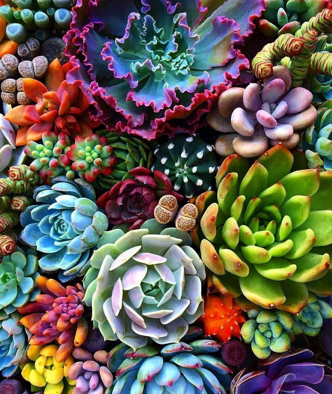 Succulent Garden Wallpapers Top Free Succulent Garden Backgrounds Wallpaperaccess
