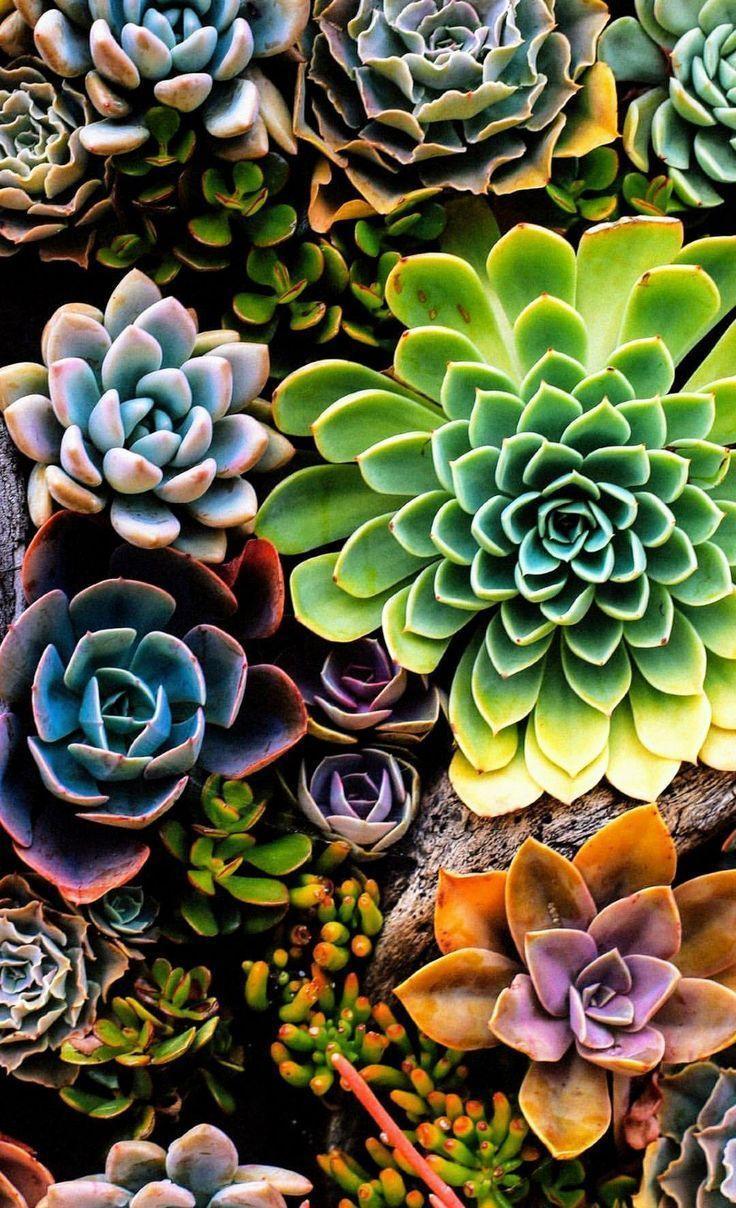 Succulent Garden Wallpapers Top Free Succulent Garden Backgrounds Wallpaperaccess