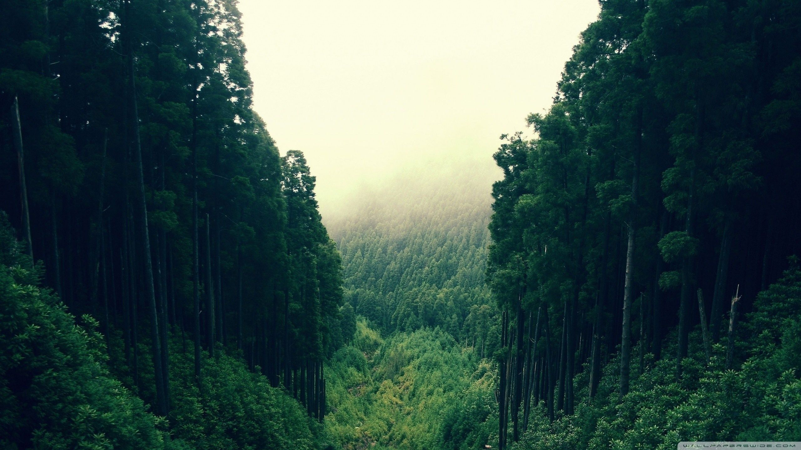 Mountain Forest Wallpapers Top Free Mountain Forest