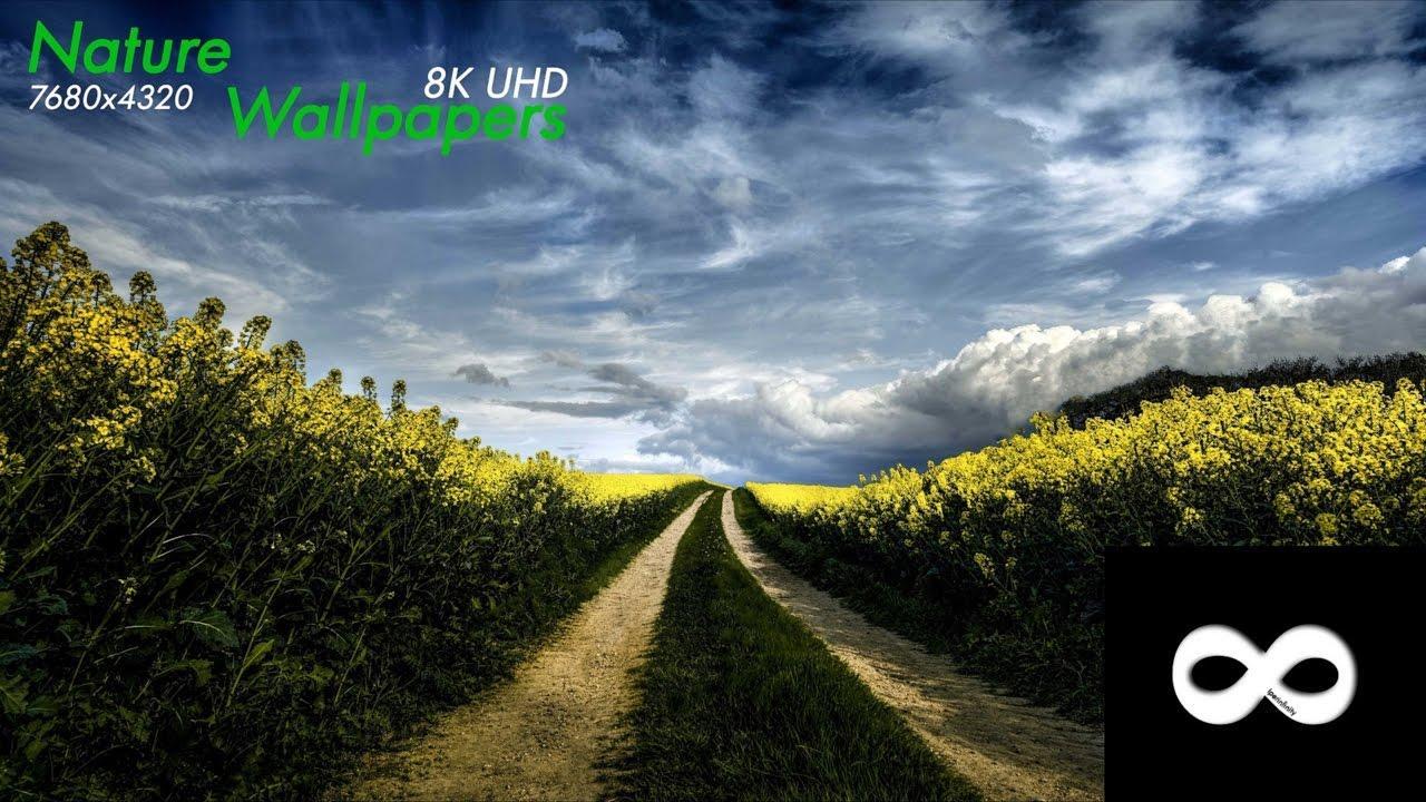 8k Wallpaper: Top Free 8K Ultra HD Backgrounds