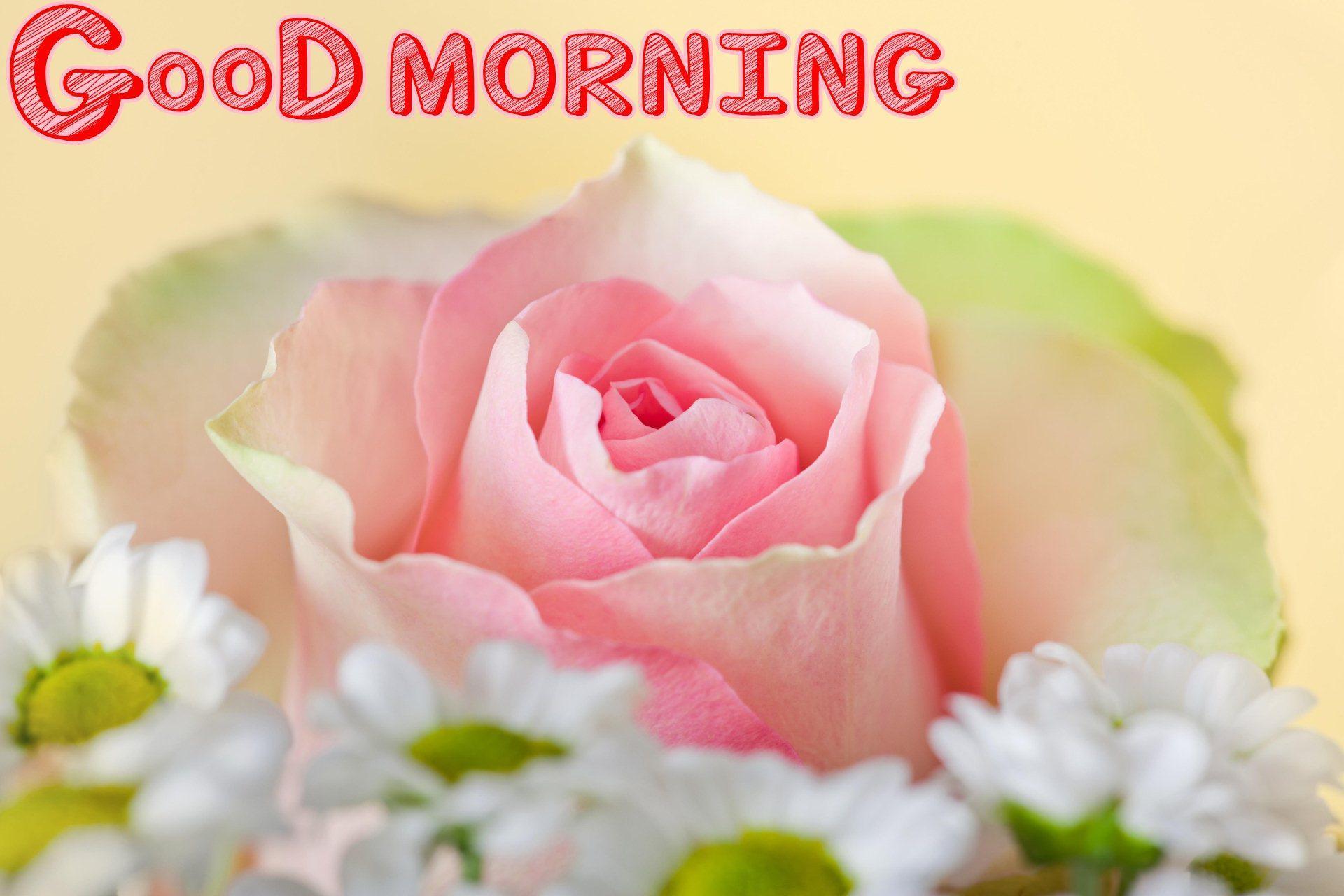 1920x1280 Chào buổi sáng Hình nền đẹp