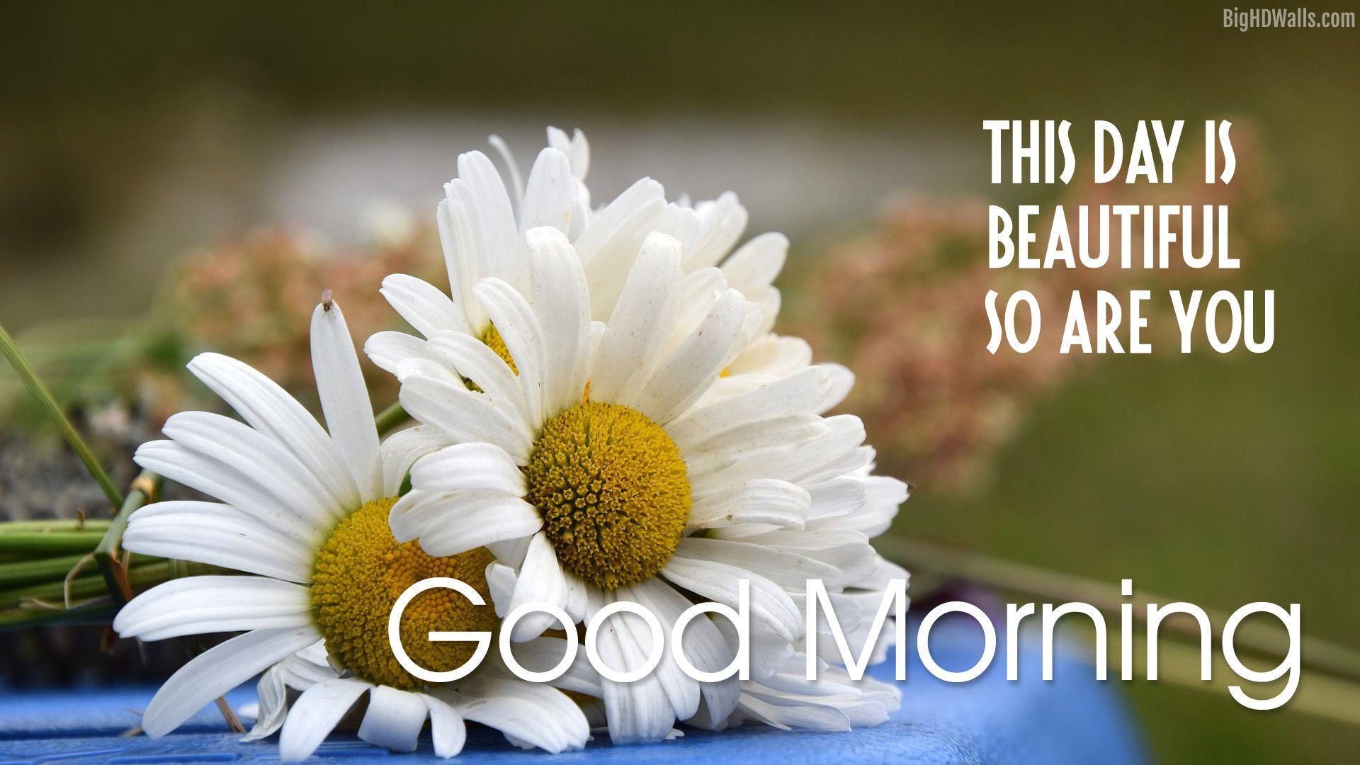 1920x1080 Beautiful Flower Good Morning Hình ảnh HD - Hình nền thiên nhiên Blog