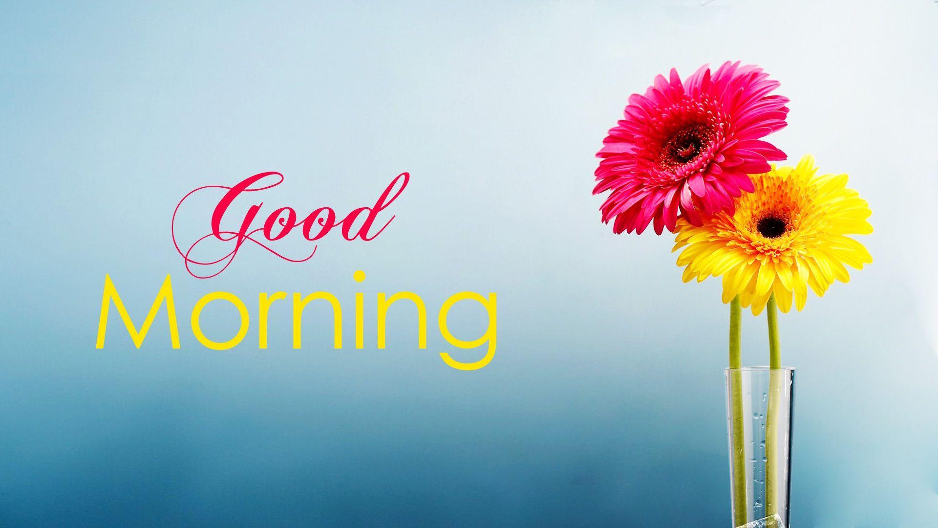 1920x1080 Chào buổi sáng Hình nền có hoa, Hình ảnh GM Full HD 1920x1080