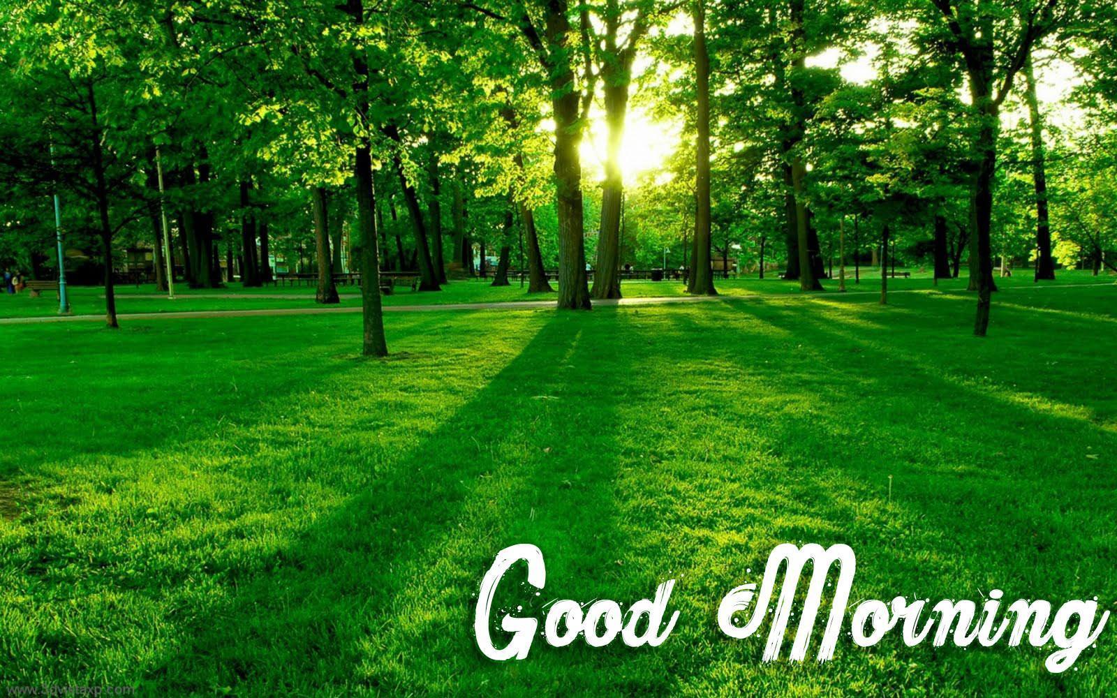 Hình nền 1600x1000 Nature Good Morning