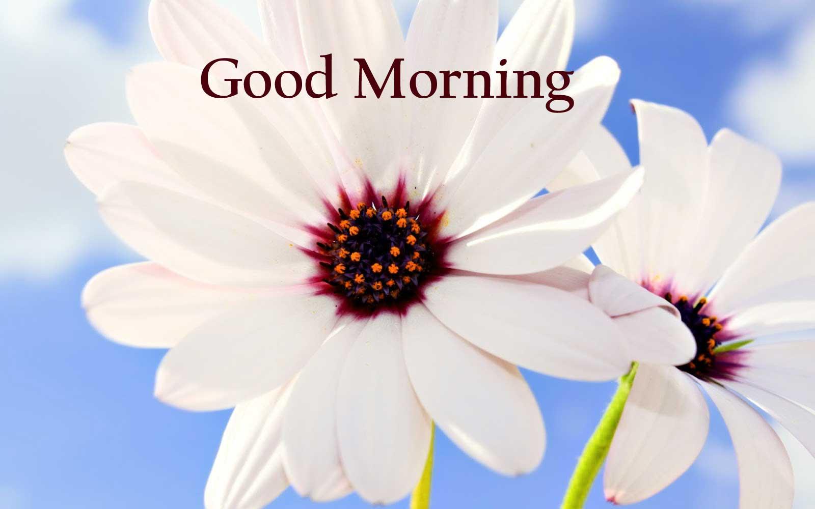 1600x1000 Hình ảnh Chào Buổi sáng Đẹp đẽ Mới với Hoa.  Bộ sưu tập hàng đầu của các loại hoa khác nhau trong hình ảnh HD