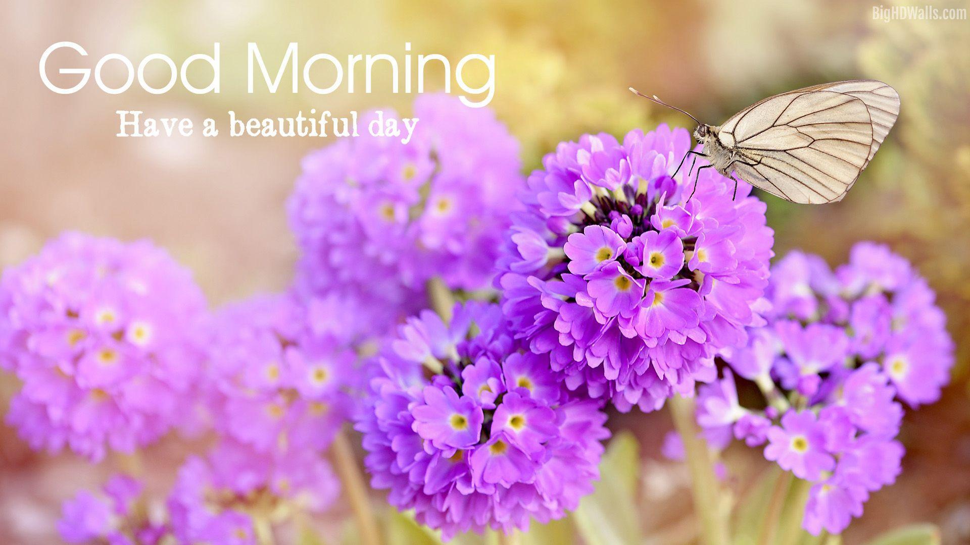 1920x1080 Beautiful Morning Flowers HD Wallpaper For Download - Good Morning Flowers HD, Tải xuống hình nền