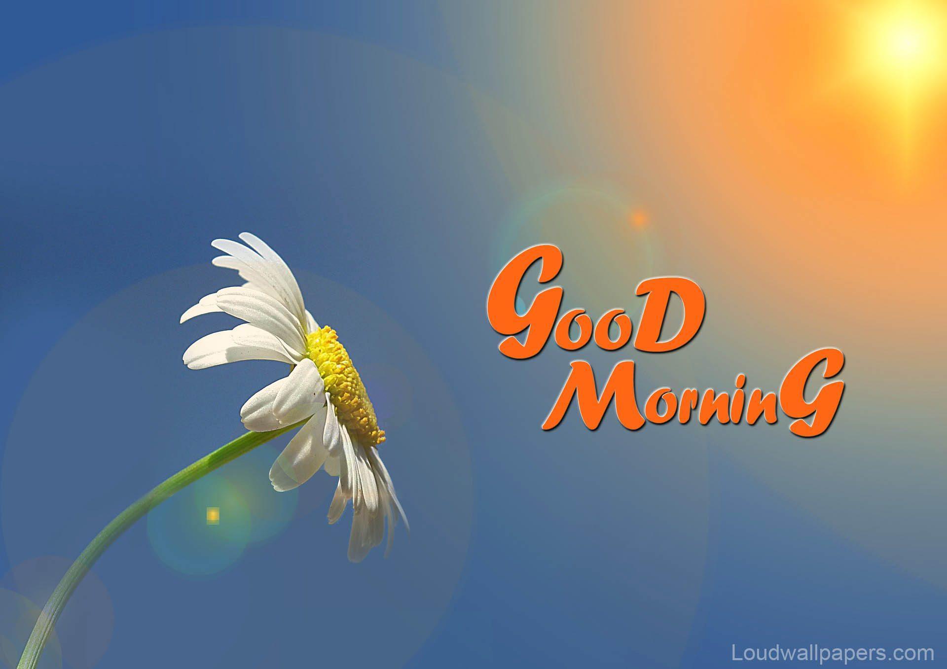 1920x1357 Chào buổi sáng đẹp đẽ với những bông hoa điều ước hình nền