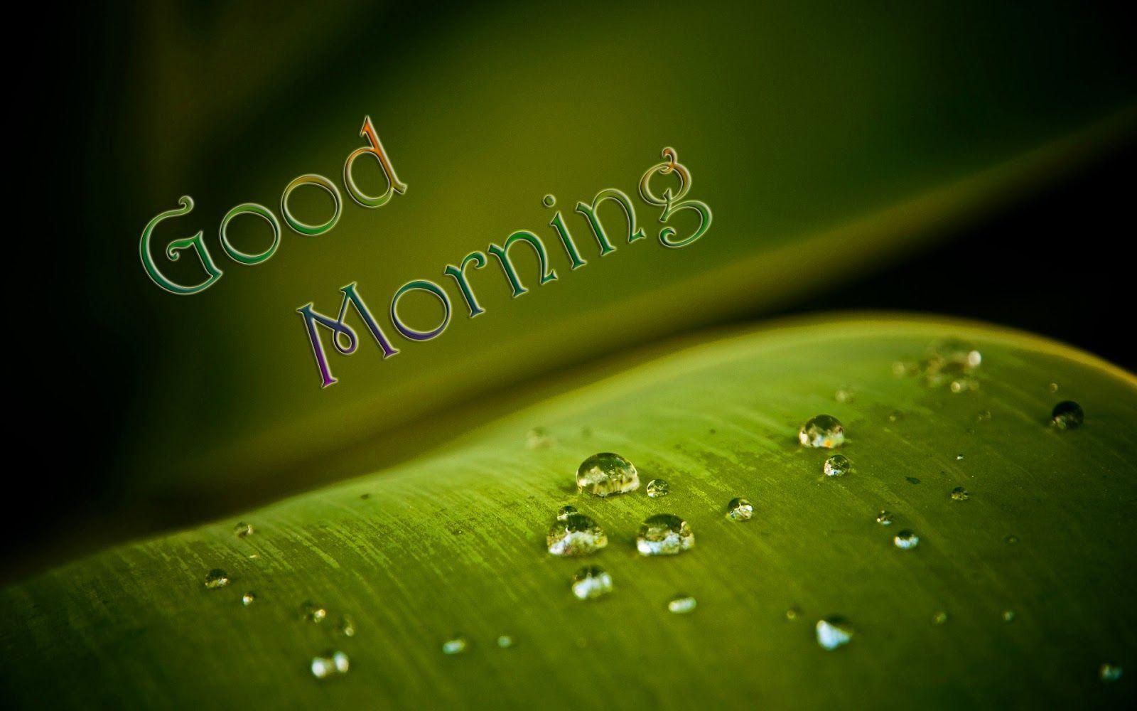 1600x1000 Chào buổi sáng - Chào buổi sáng đẹp HD - 1600x1000 - Tải xuống Hình nền HD