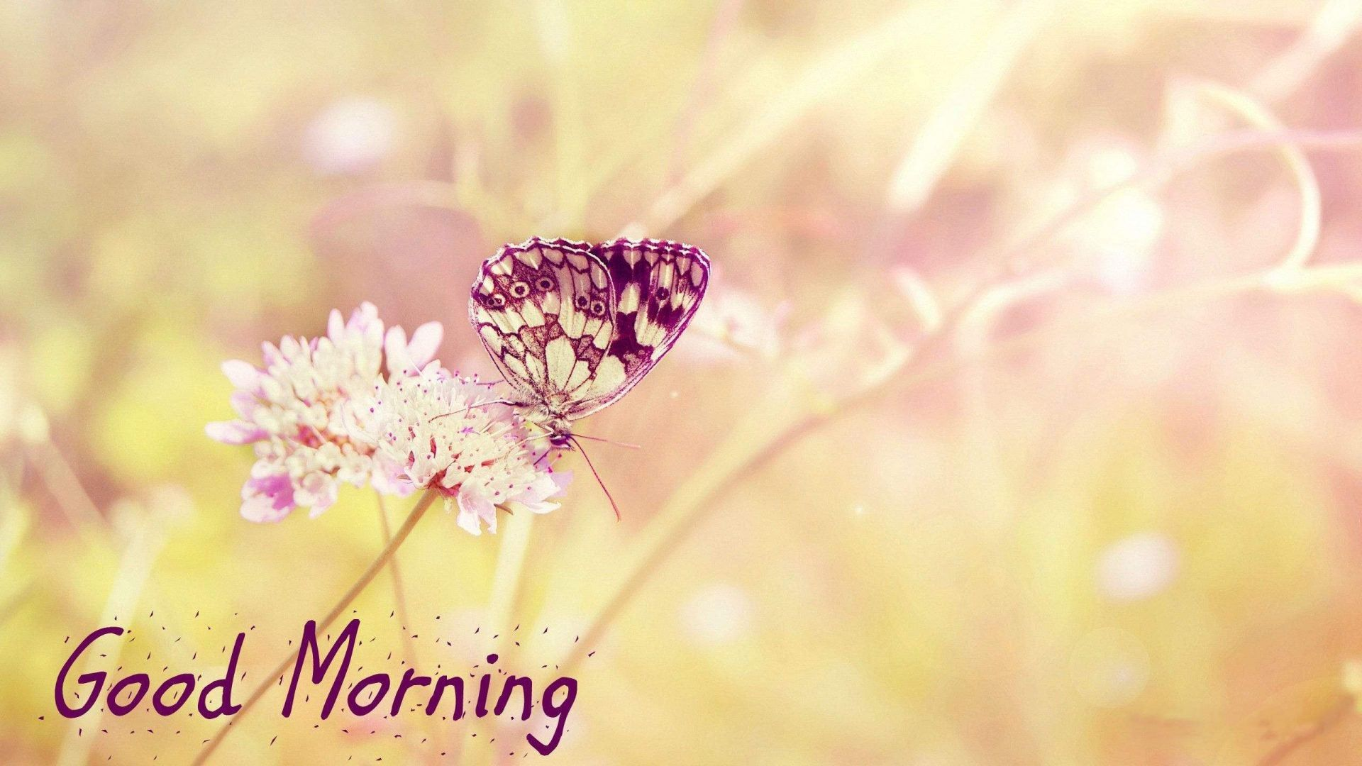 1920x1080 Chào buổi sáng Hình nền đẹp HD [1920 × 1080] : hình nền