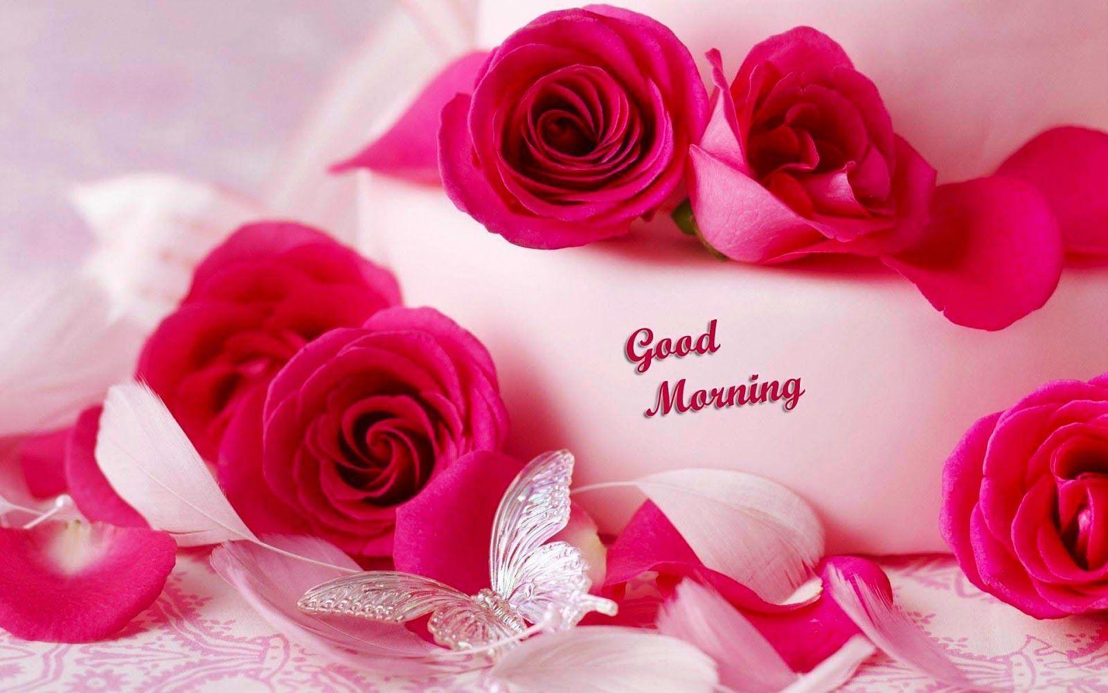 1600x1000 Chào buổi sáng của hoa.  Hình nền hoa đẹp HD, Hình ảnh hoa đẹp, Hình nền hoa đẹp