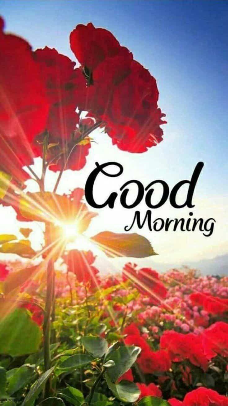 735x1307 TÌNH TRẠNG TÌNH YÊU THƯƠNG MẠI VÀ VẼ TƯỜNG TỐT.  Báo giá buổi sáng cho bạn bè, Hình ảnh hoa chúc buổi sáng, Hình ảnh đẹp buổi sáng