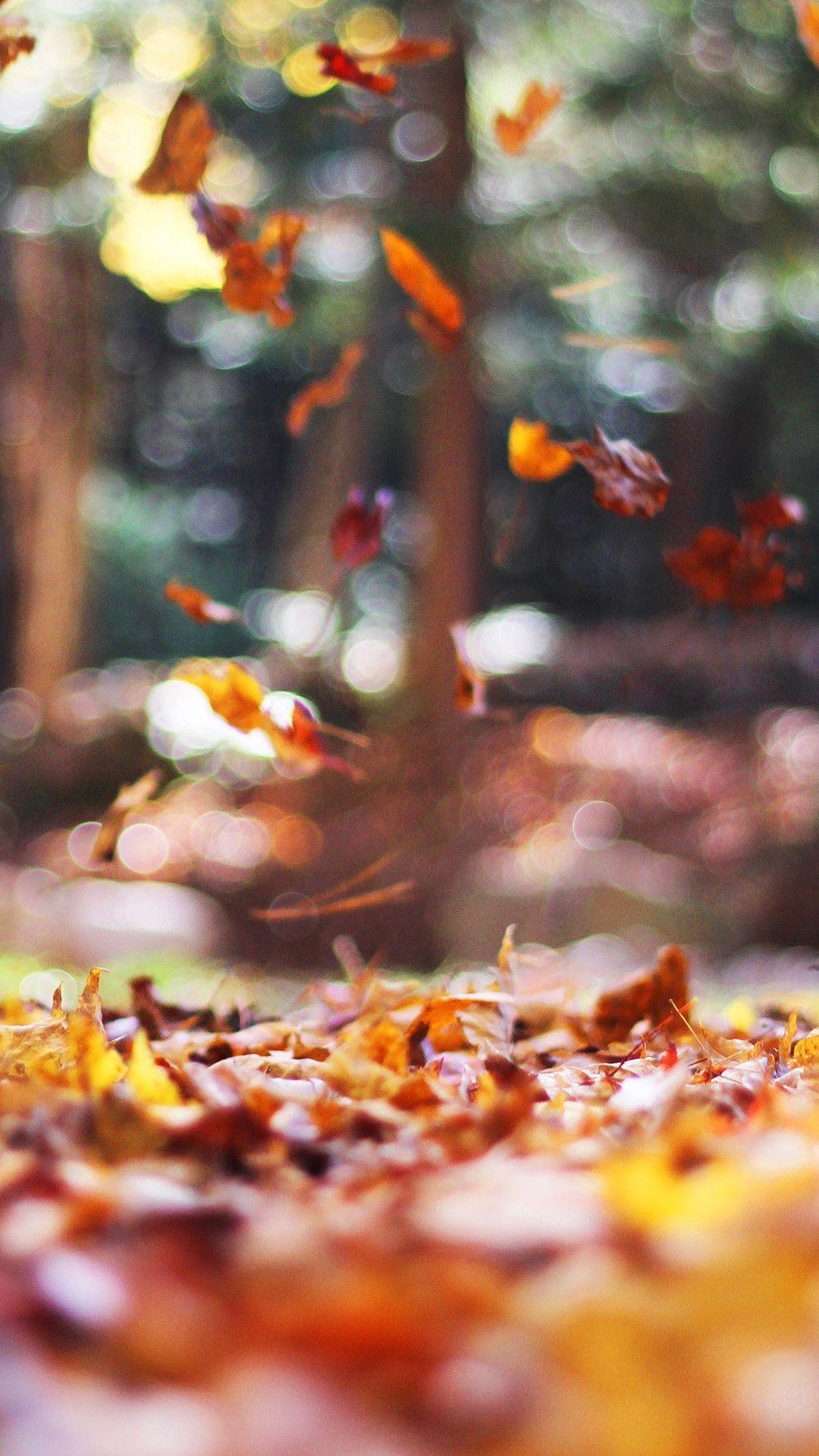 1080x1920 Mùa thu Lá thiên nhiên Cây Năm buồn Hình nền iphone.  - Tập tin media