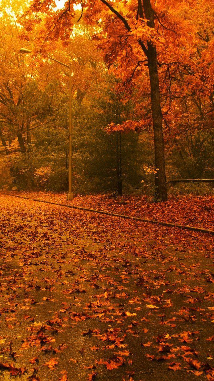 750x1334 Fall Hình nền iPhone