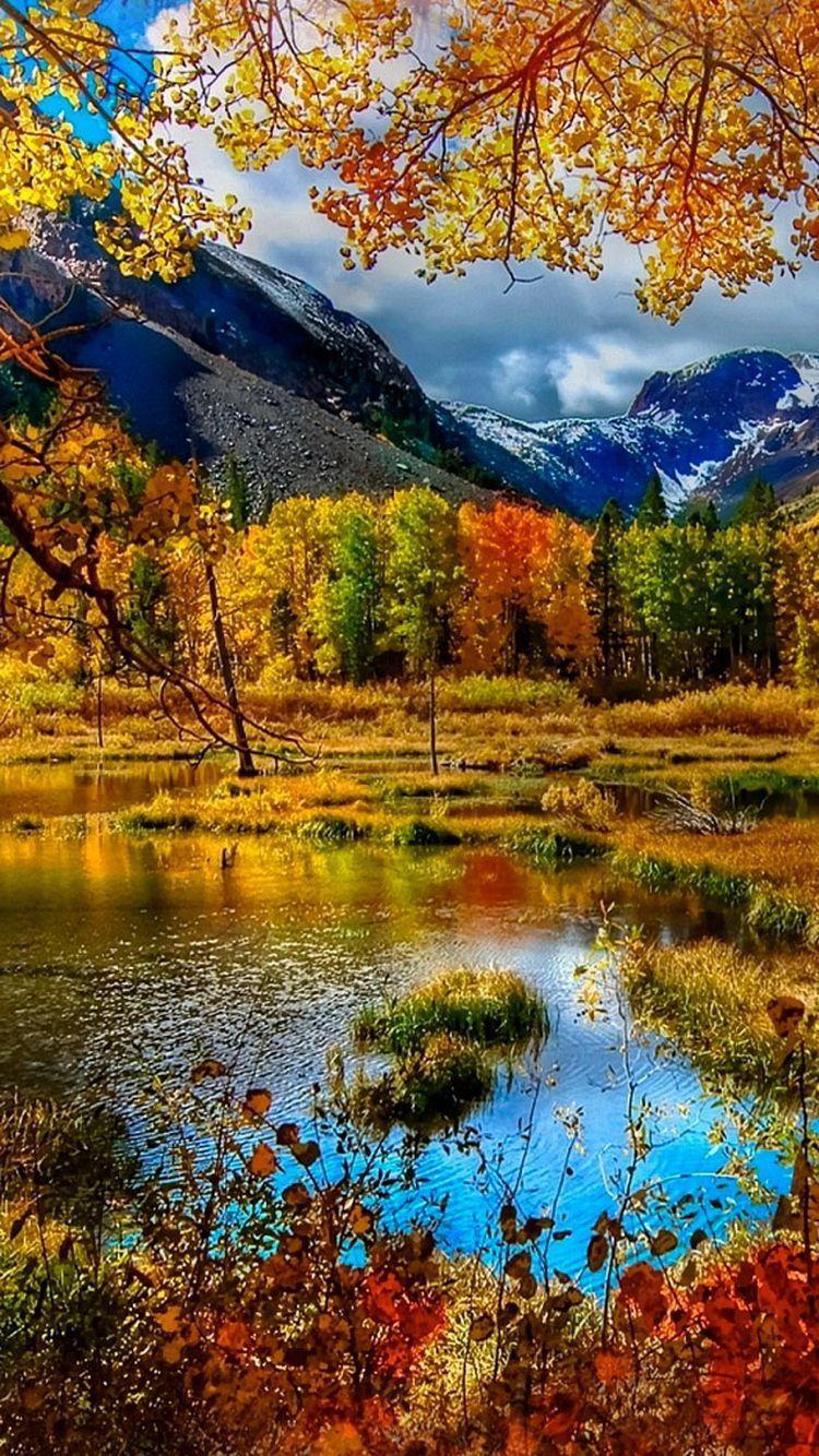 750x1334 Herbstzeit, Thẻ goldener.  Природа.  Mùa thu, Nhiếp ảnh