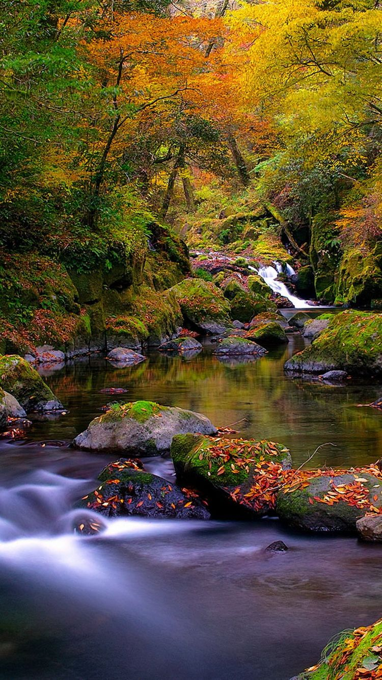 750x1334 Forest Creek Autumn Hình nền iPhone 6 HD