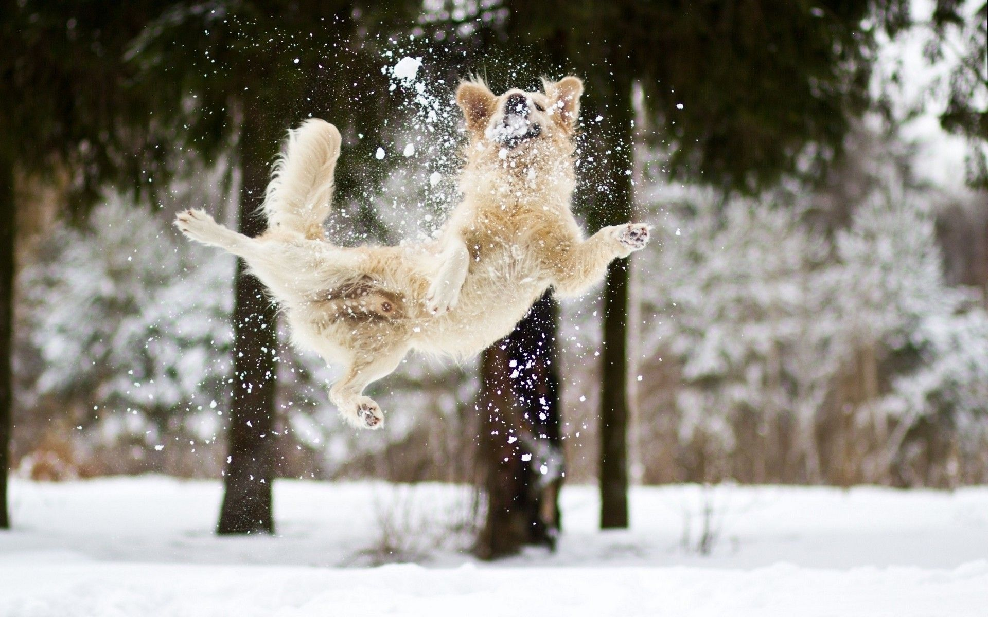 Winter Dog Wallpapers Top Free Winter Dog Backgrounds Wallpaperaccess