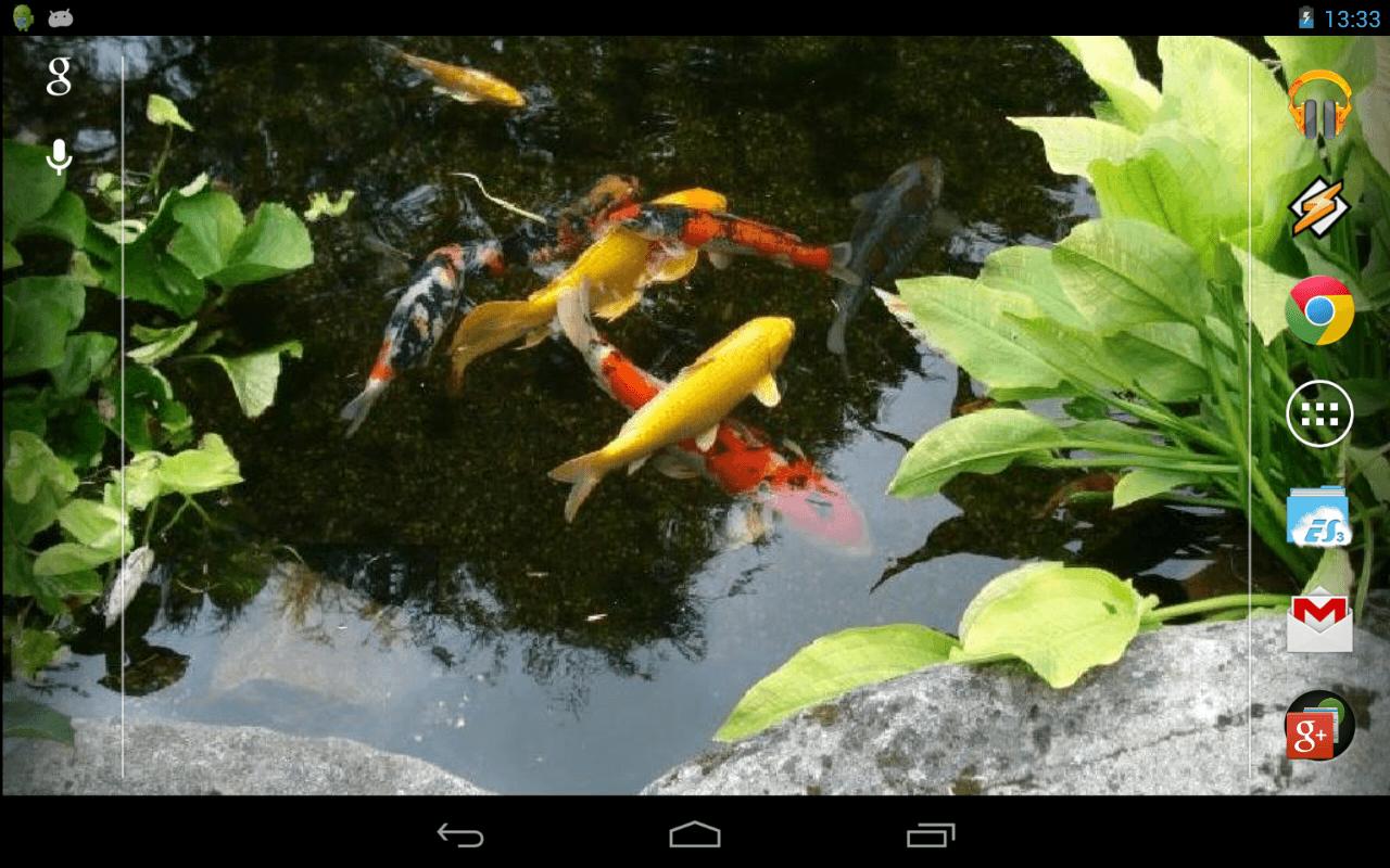 Koi fish pond wallpapers top free koi fish pond for Koi pond screensaver