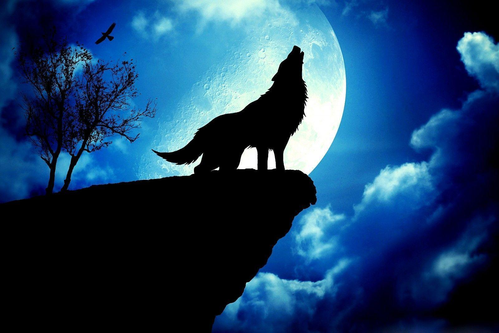 Blue Moon And Wolf Wallpapers Top Free Blue Moon And Wolf Backgrounds Wallpaperaccess