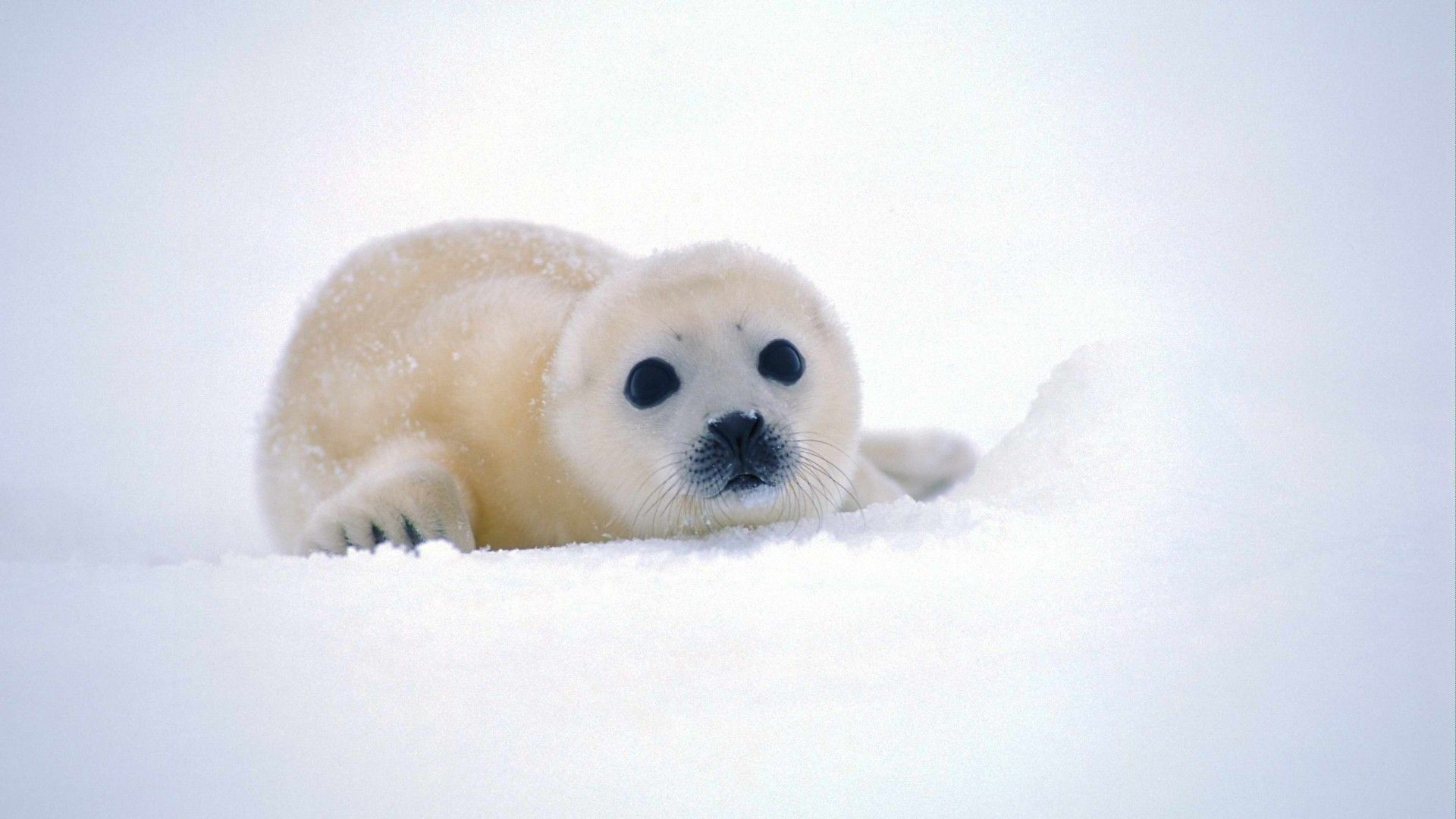 Baby Animals Wallpapers HD New Tab Themes Free