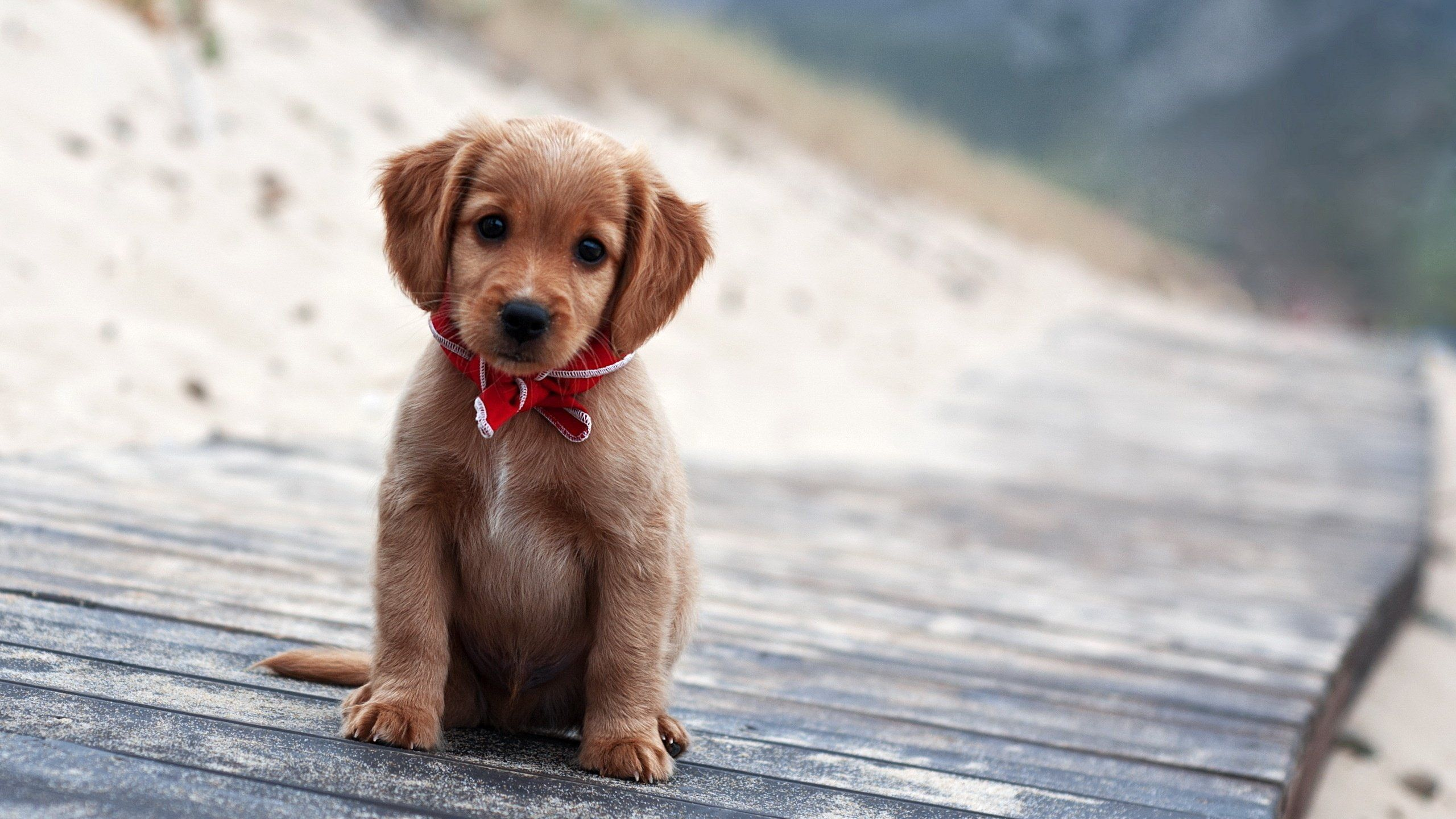 cute puppies wallpapers for mobile