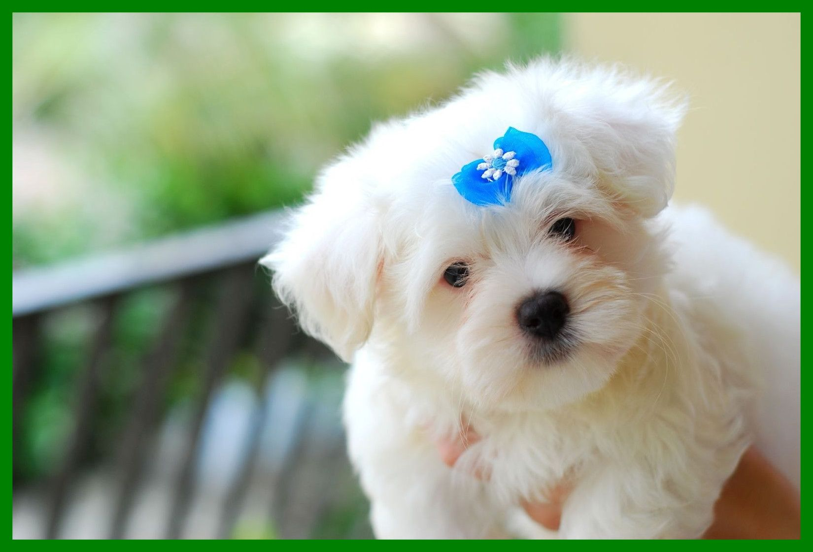 Cute Puppy Wallpapers Top Free Cute Puppy Backgrounds