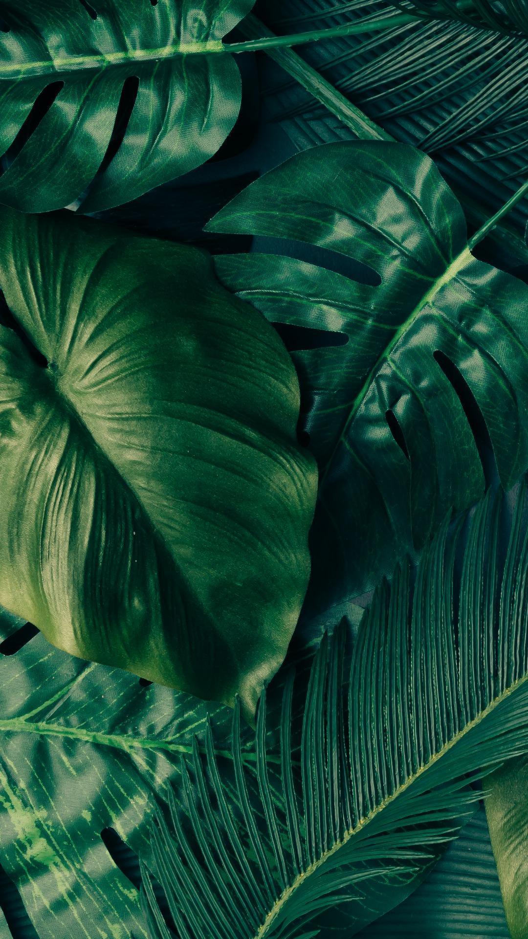 Tropical Leaves Iphone Wallpapers Top Free Tropical Leaves Iphone Backgrounds Wallpaperaccess Looking for the best aesthetic wallpapers? tropical leaves iphone wallpapers top