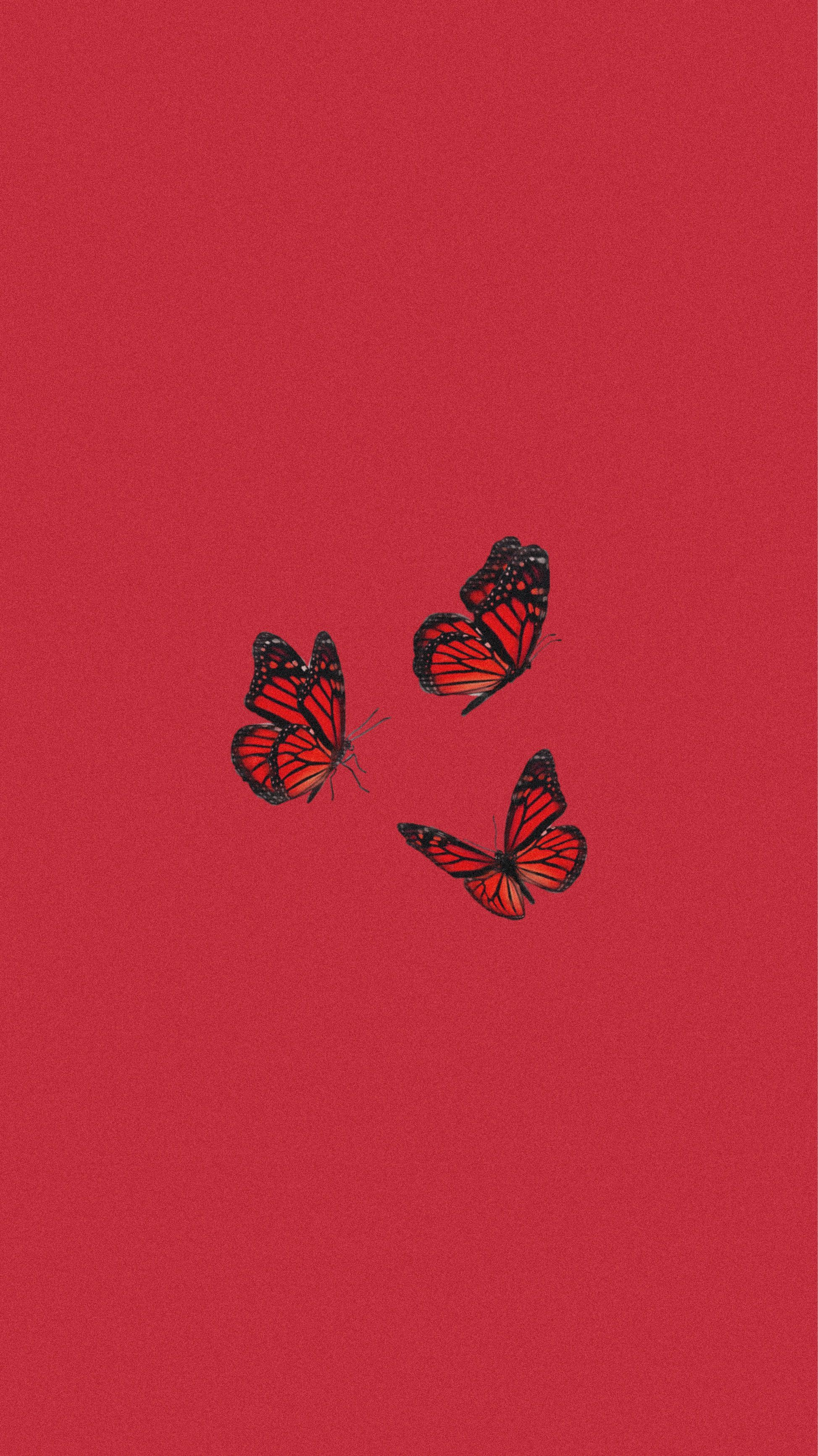 Cute Red Butterfly Wallpapers Top Free Cute Red Butterfly Backgrounds Wallpaperaccess