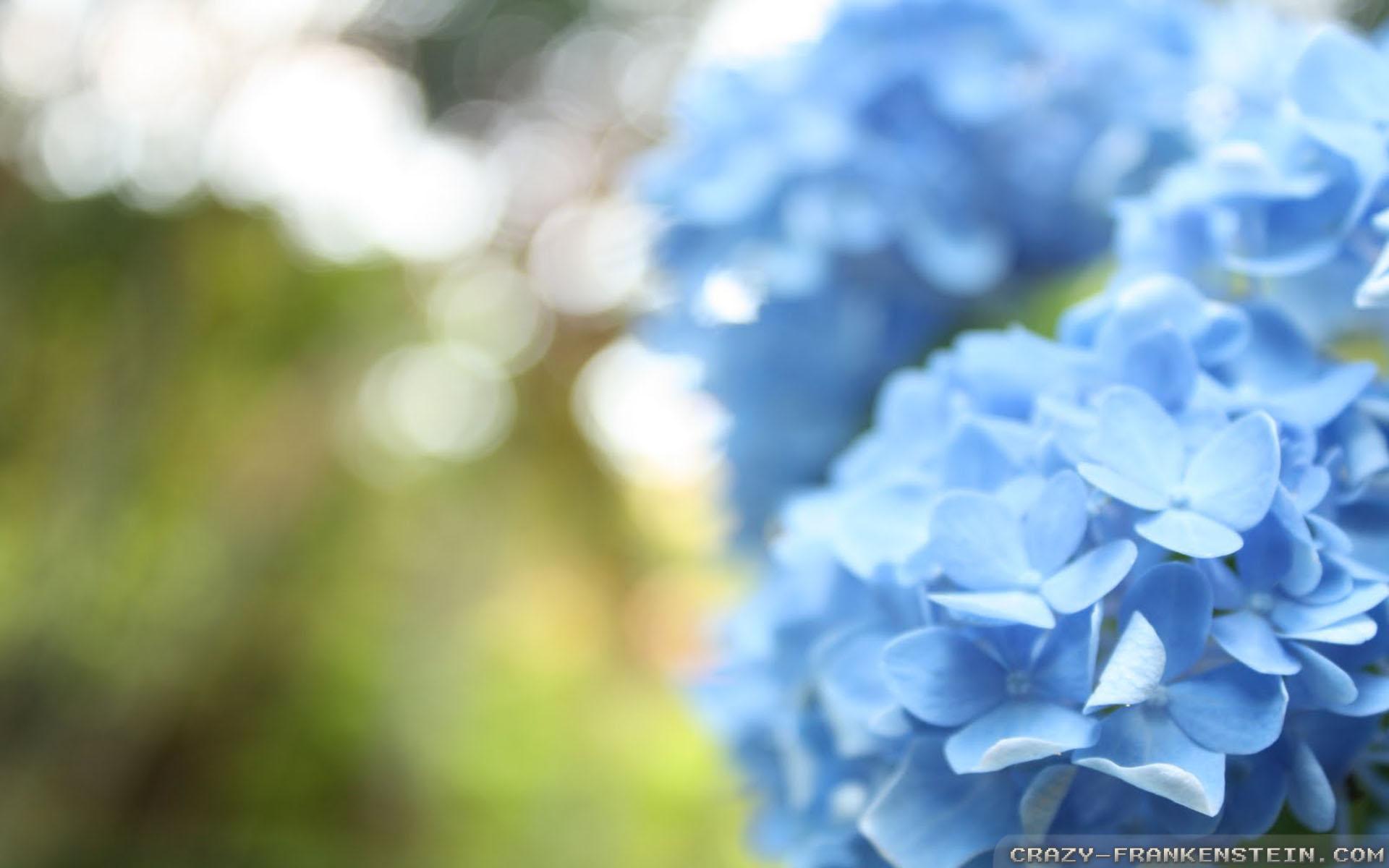 Hình nền hoa màu xanh nhạt 1920x1200